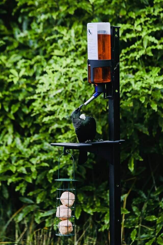 A Pekapeka feeder (Photo: Tahu Mackenzie)