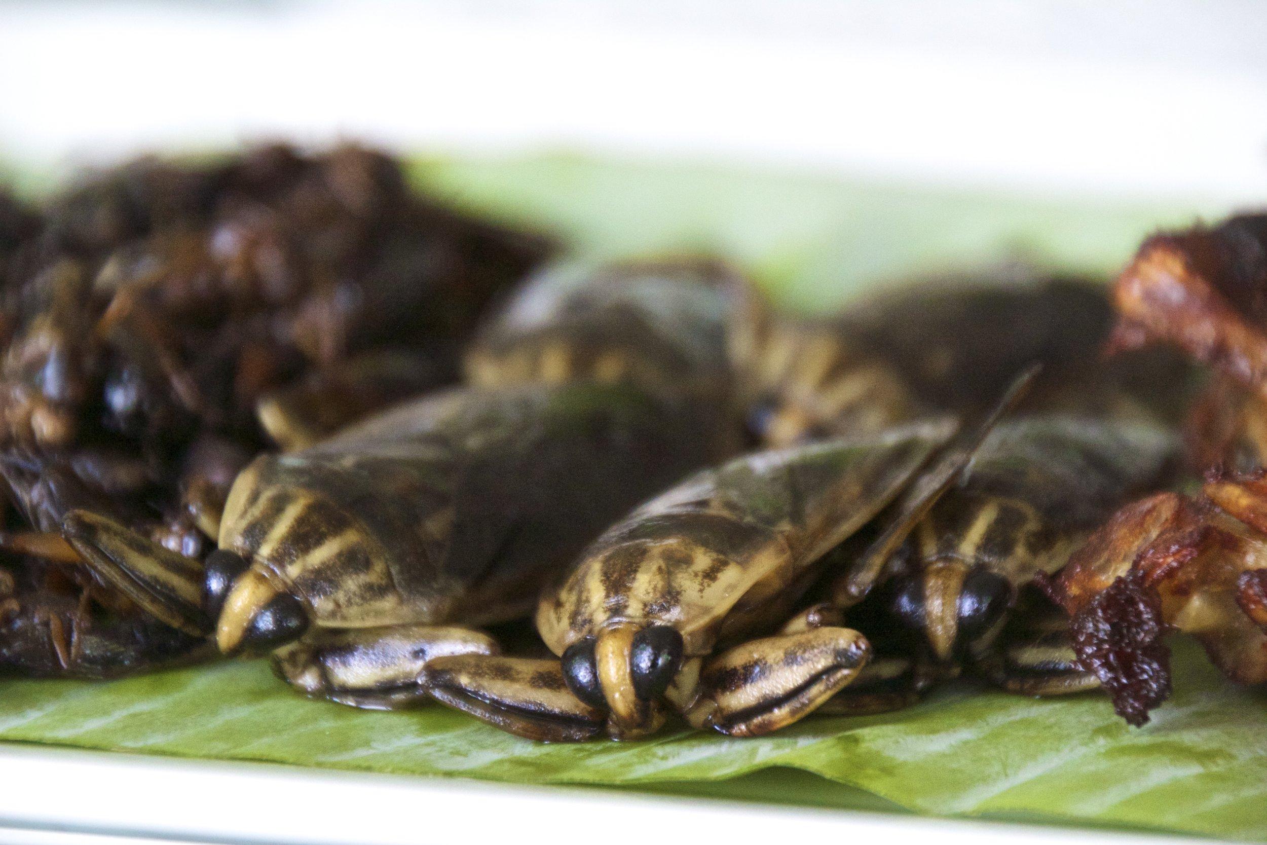 thai food cockroaches horseshoe crabs 2.jpg