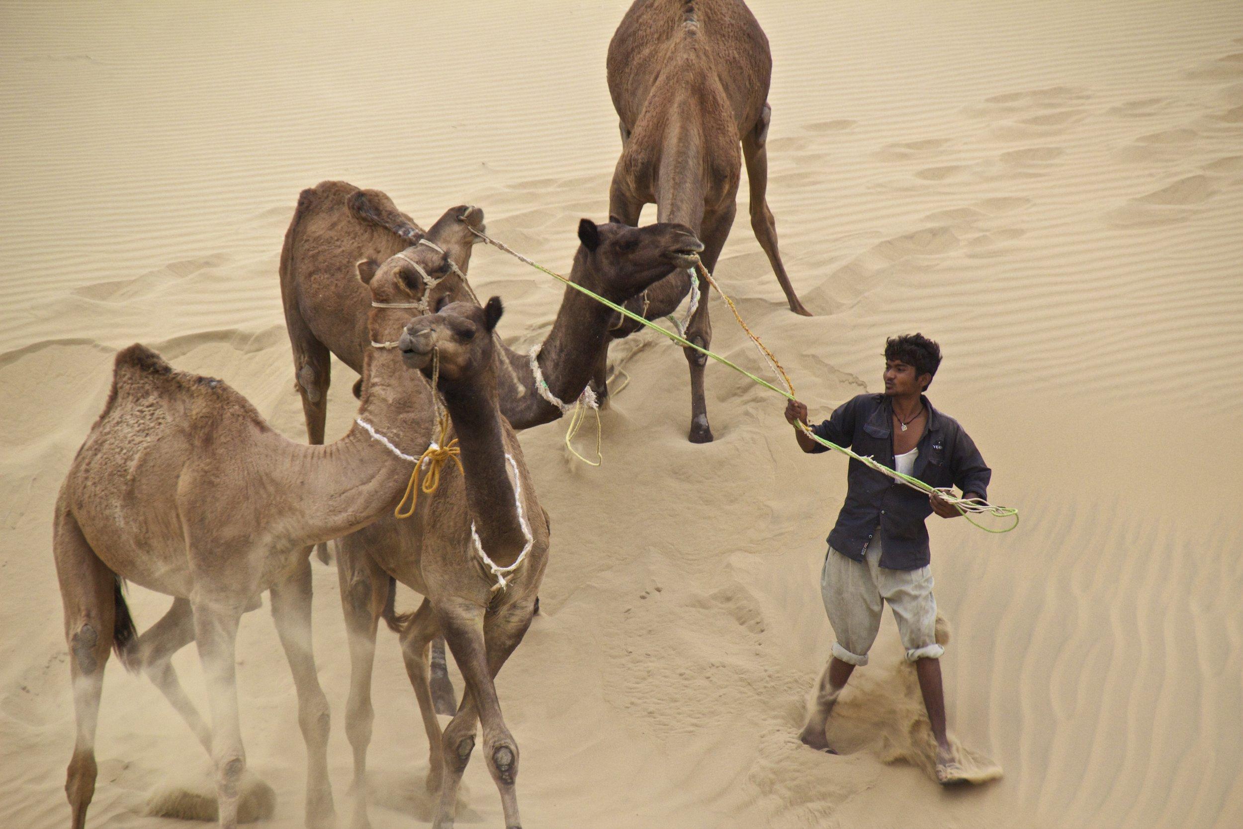 thar desert rajasthan camel safari 5.jpg