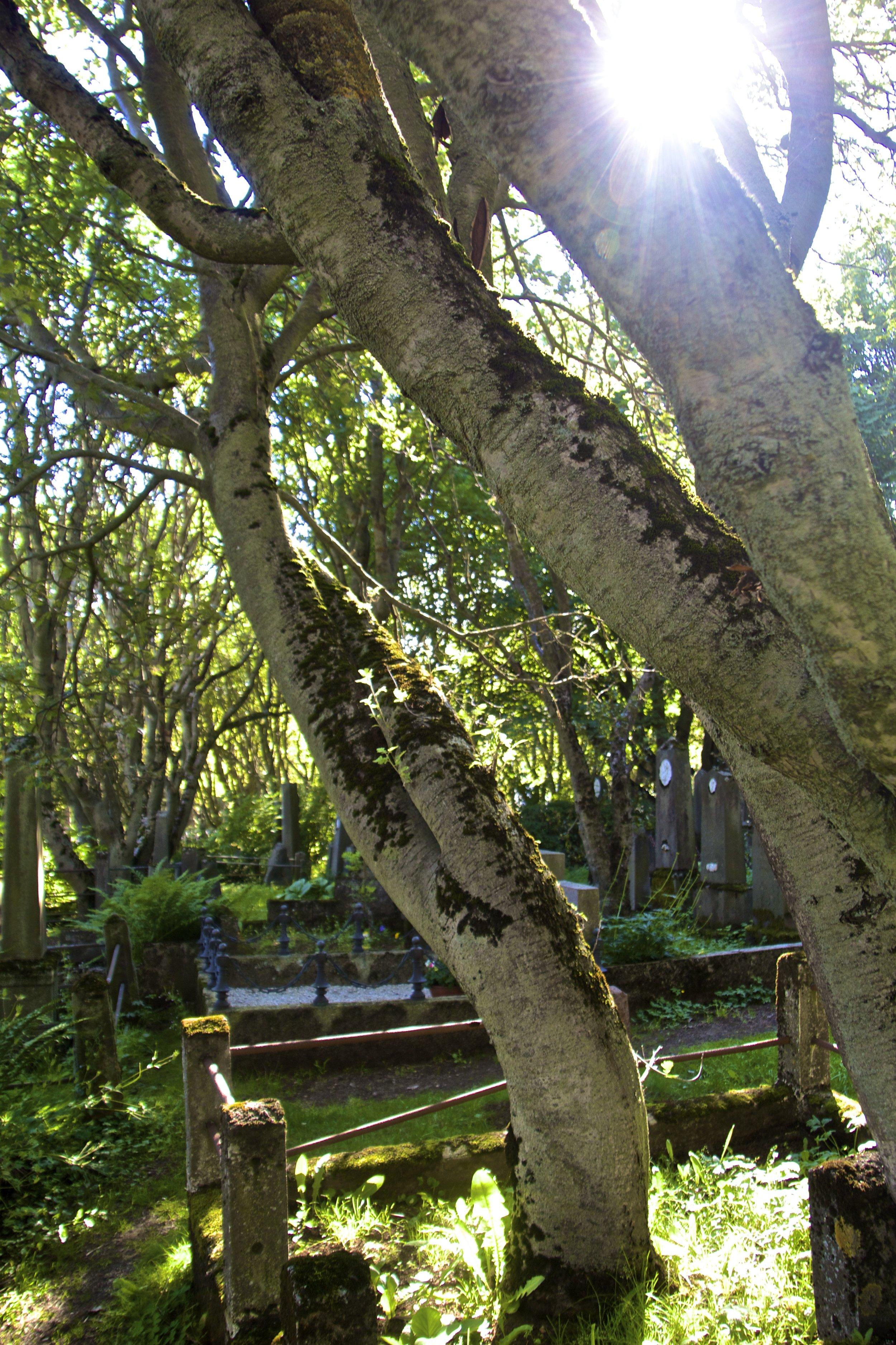 Hólavallagarður Cemetery Reykjavik 11.jpg