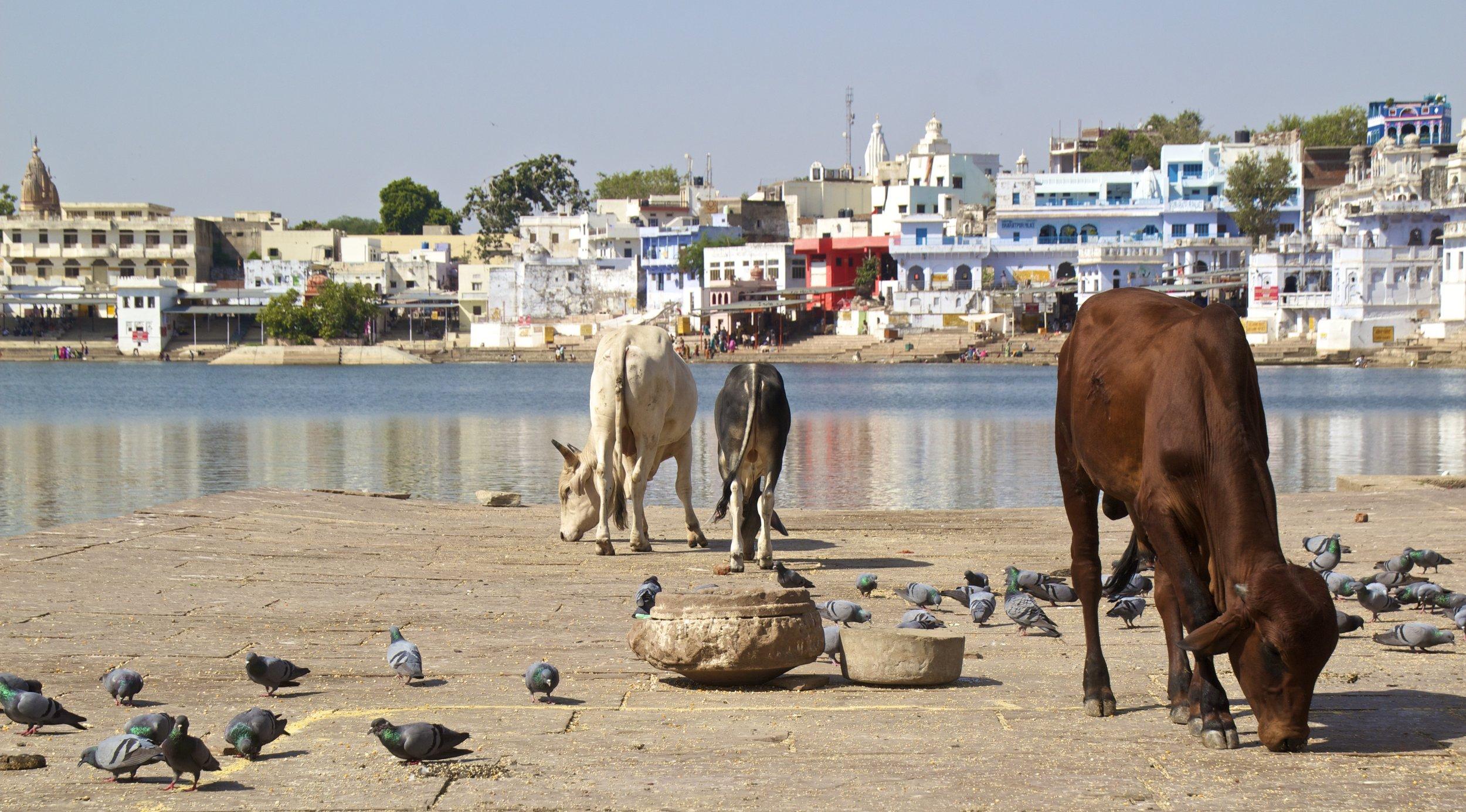 white city ghats pushkar rajasthan photography 6.jpg