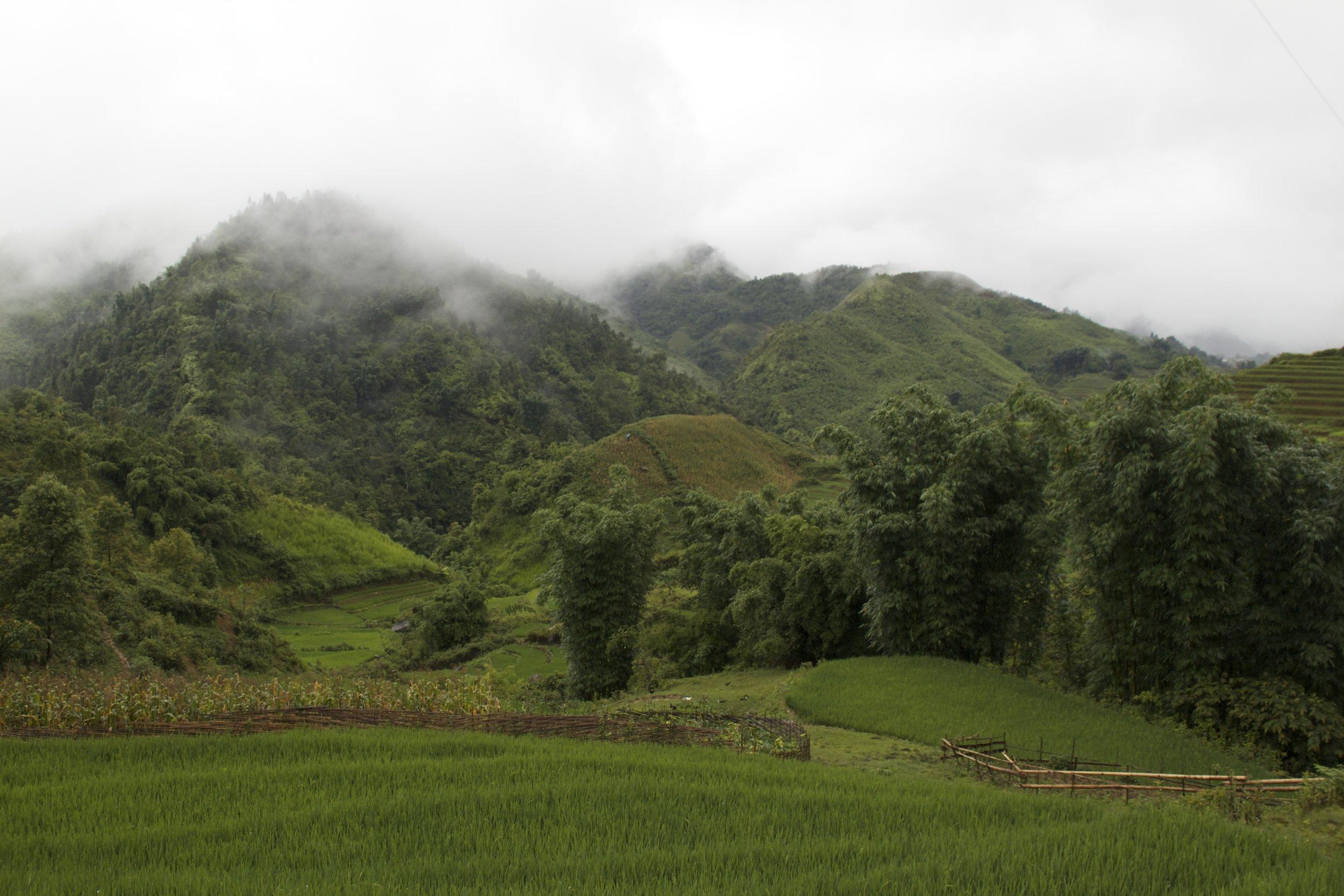 sa pa lao cai vietnam rice paddies 4.jpg