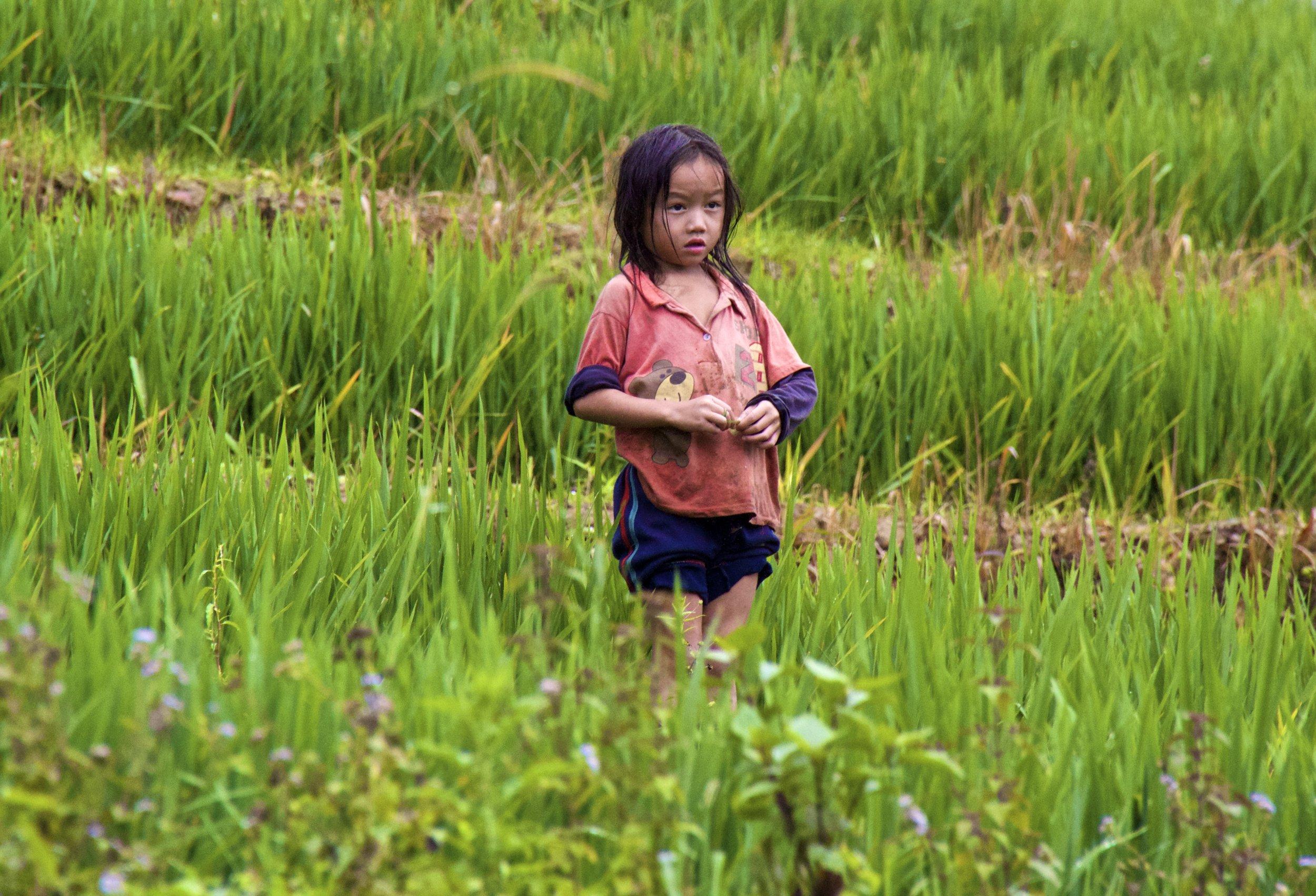 sa pa hmong people rice paddies 1.jpg