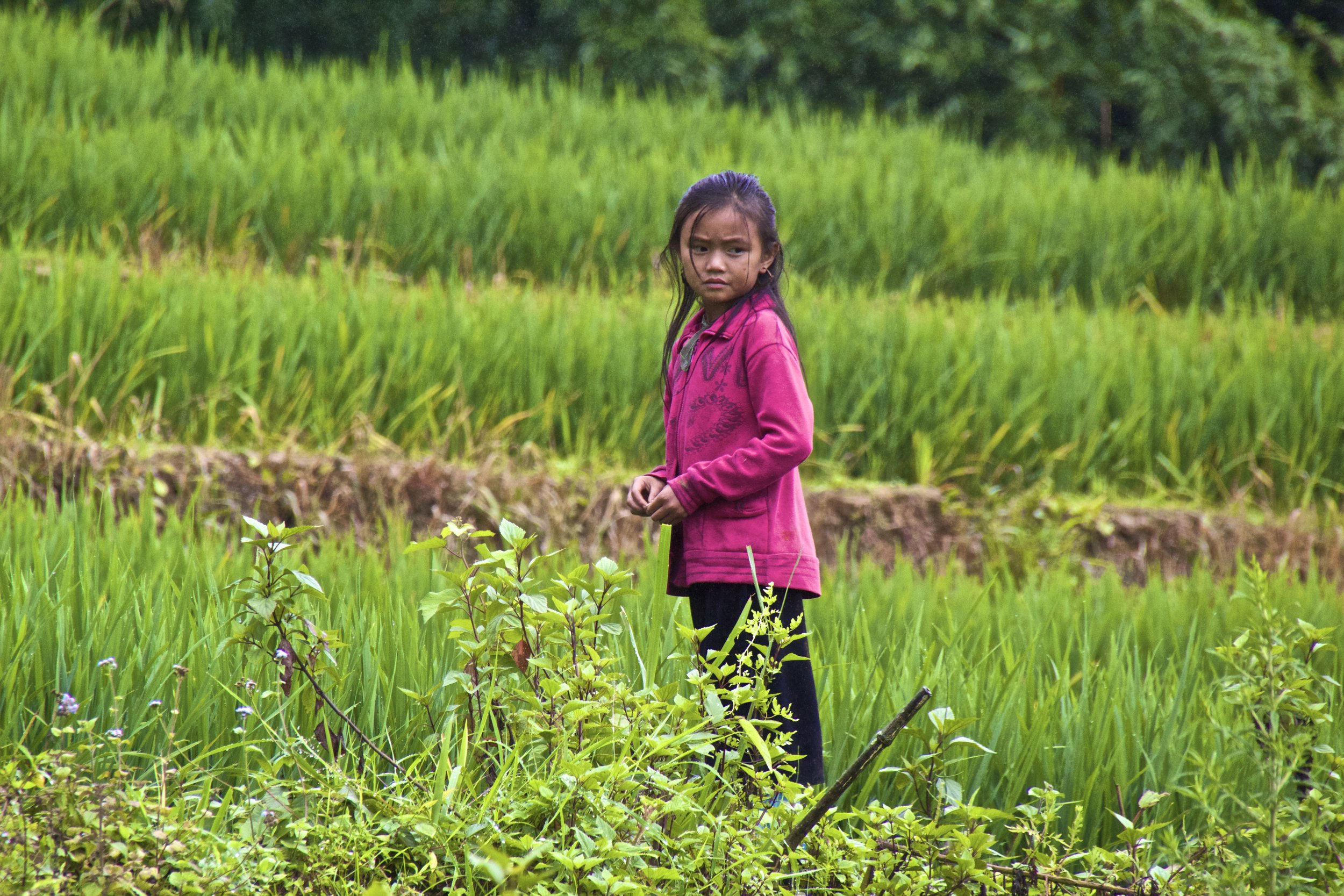 sa pa hmong people rice paddies 2.jpg