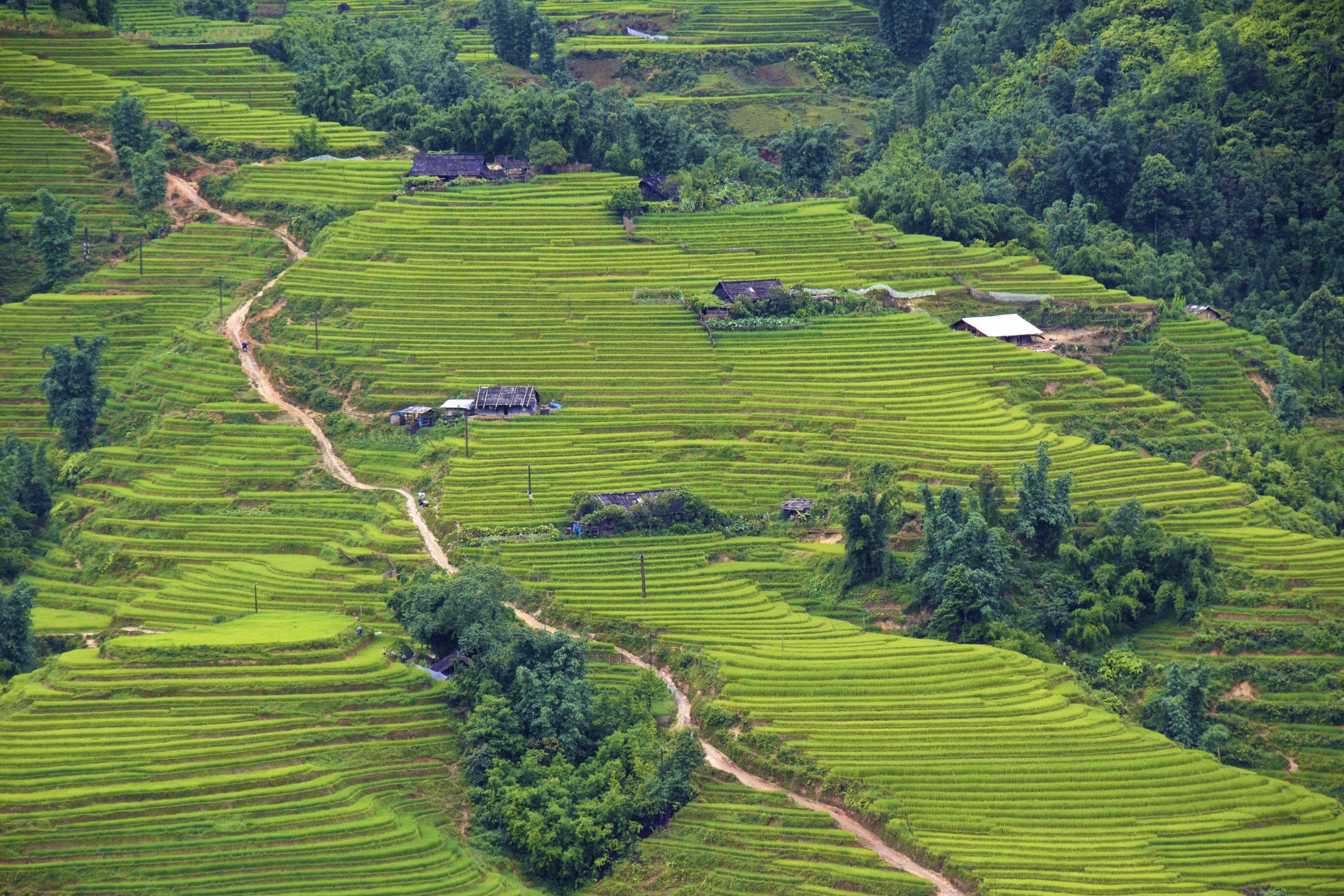 sa pa lao cai vietnam rice paddies 7.jpg
