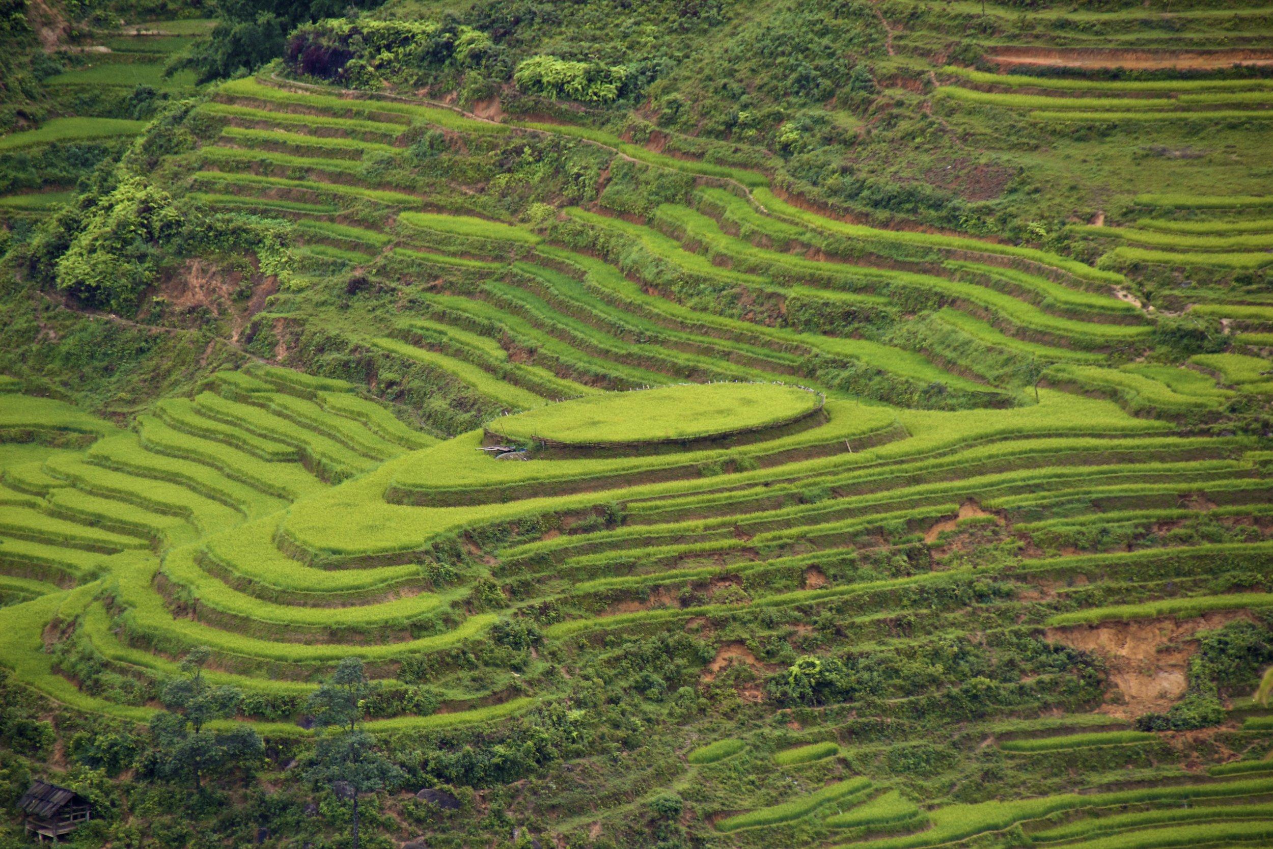 sa pa lao cai vietnam rice paddies 12.jpg