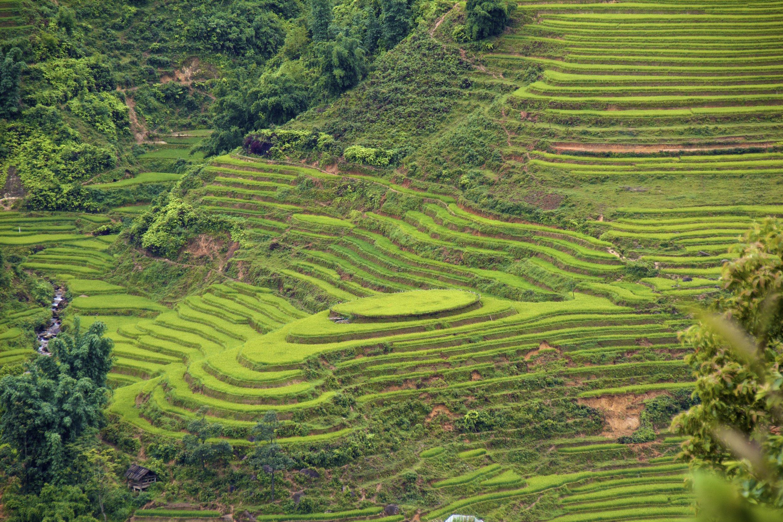 sa pa lao cai vietnam rice paddies 13.jpg