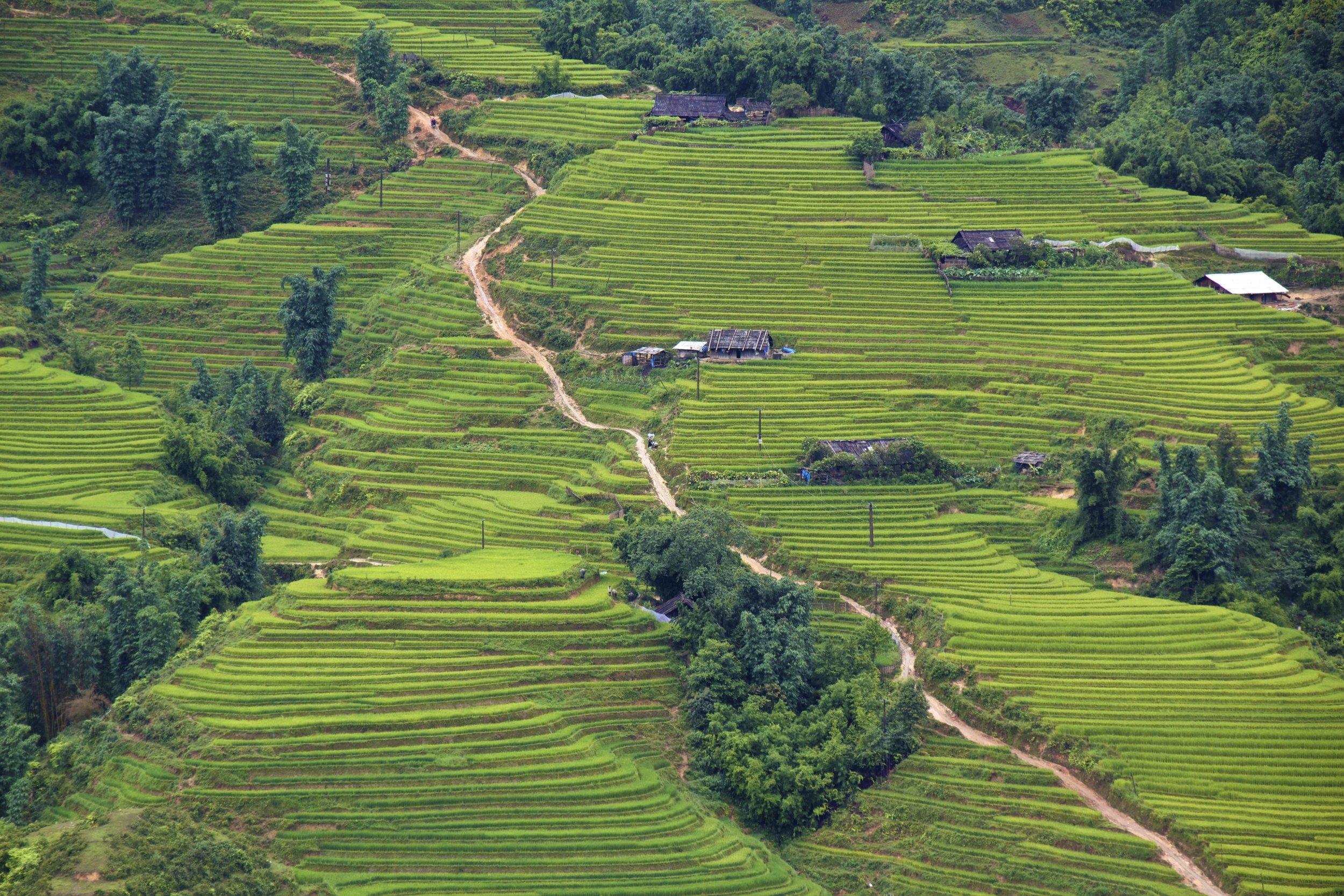 sa pa lao cai vietnam rice paddies 16.jpg