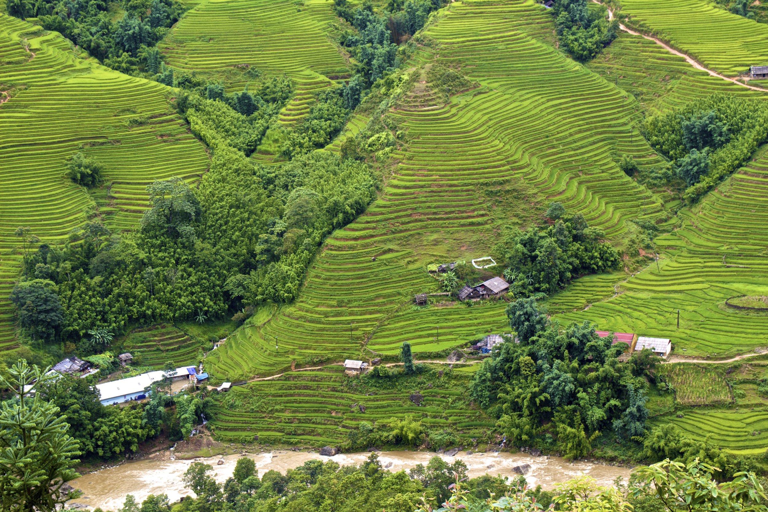 sa pa lao cai vietnam rice paddies 19.jpg