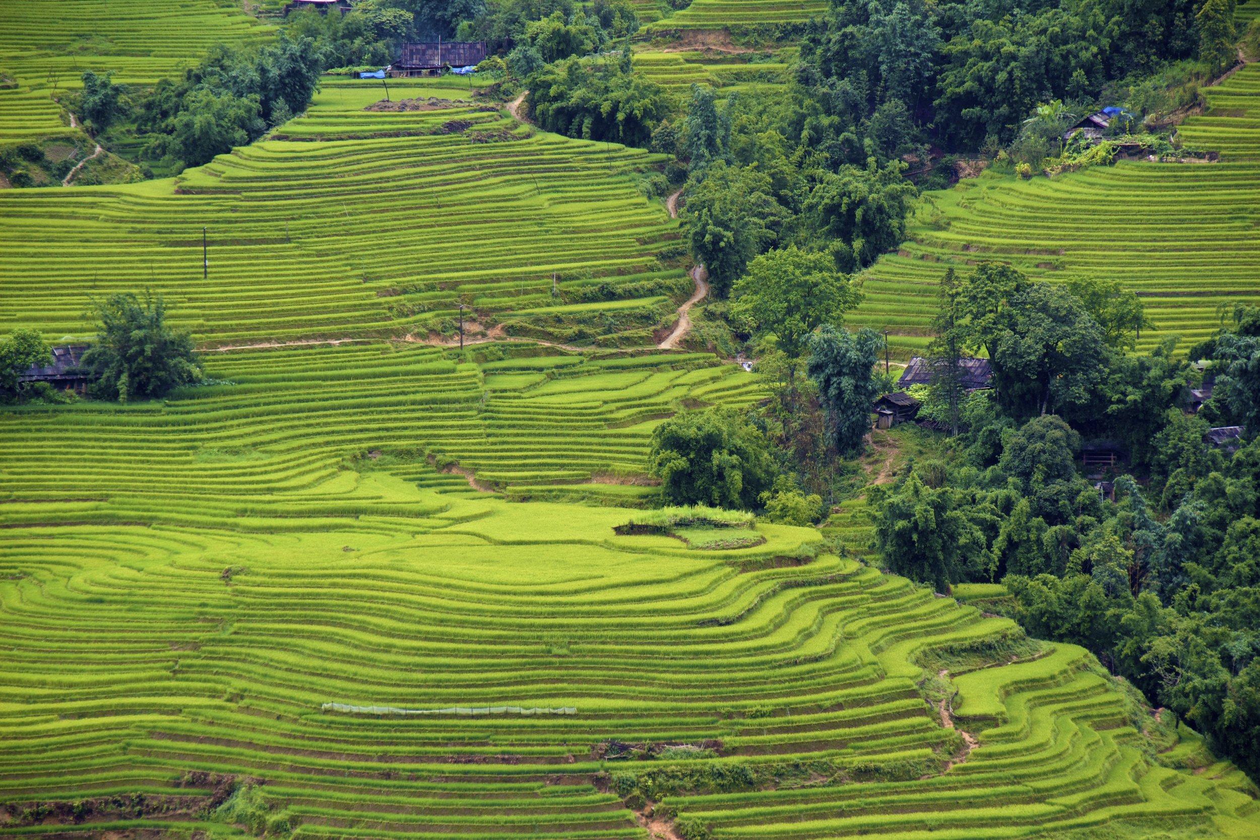 sa pa lao cai vietnam rice paddies 22.jpg