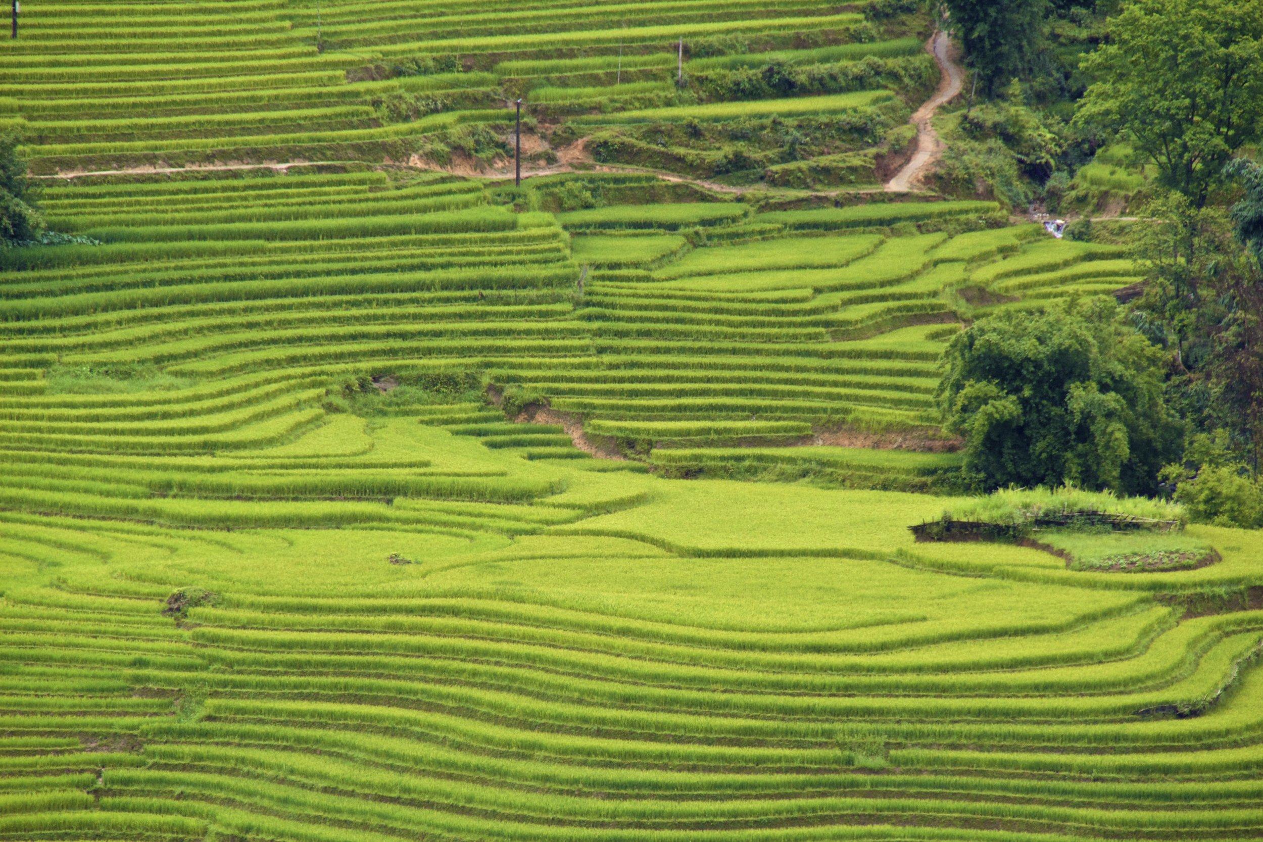 sa pa lao cai vietnam rice paddies 24.jpg