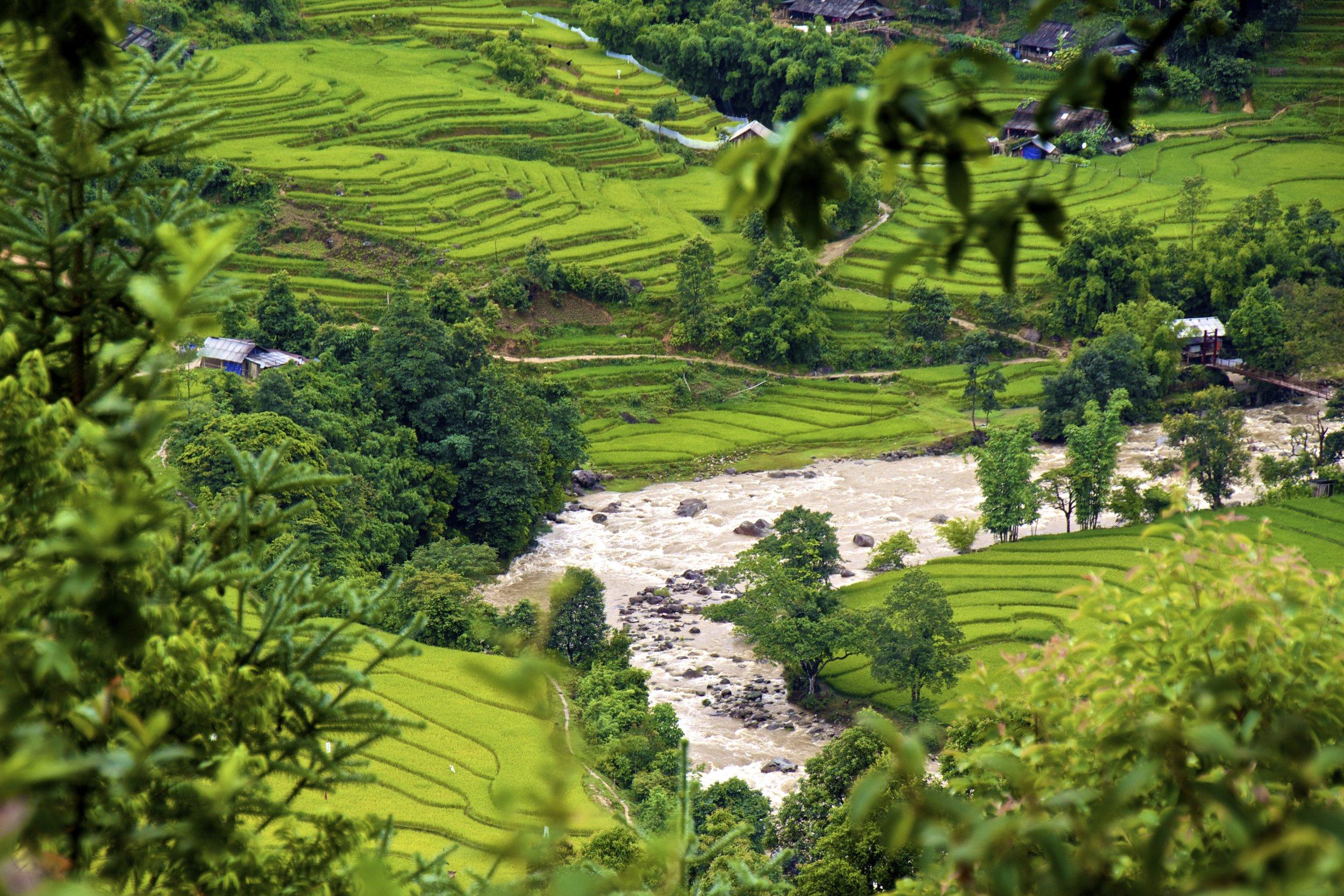 sa pa lao cai vietnam rice paddies 25.jpg