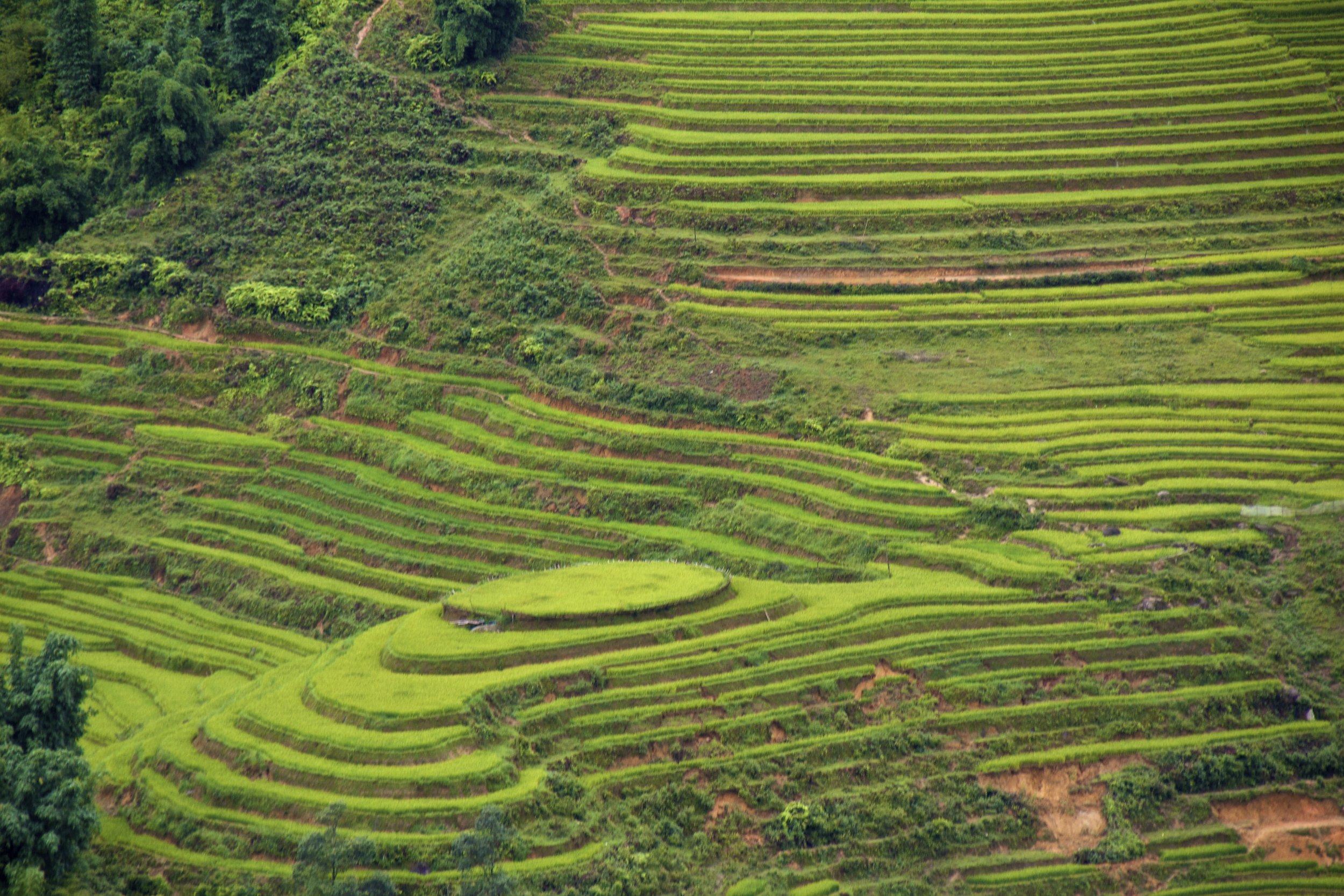 sa pa lao cai vietnam rice paddies 26.jpg