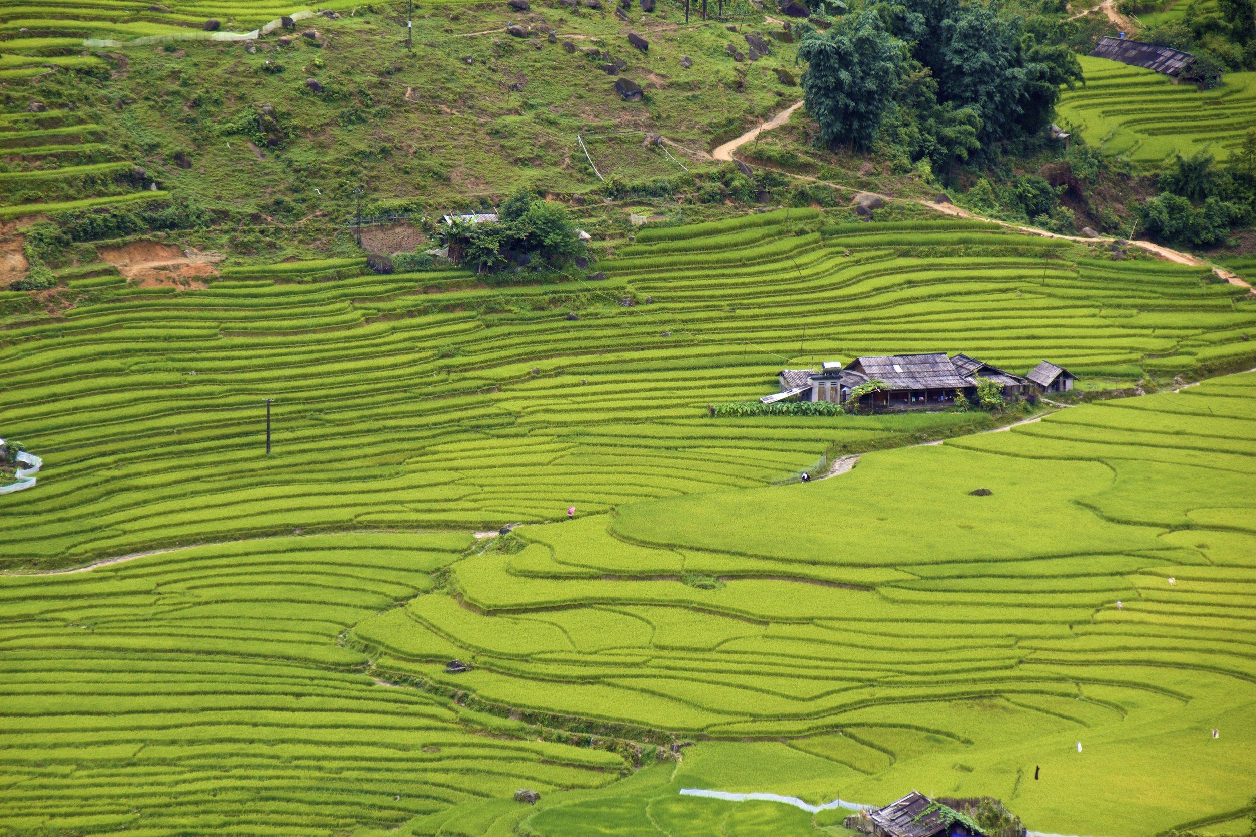 sa pa lao cai vietnam rice paddies 33.jpg