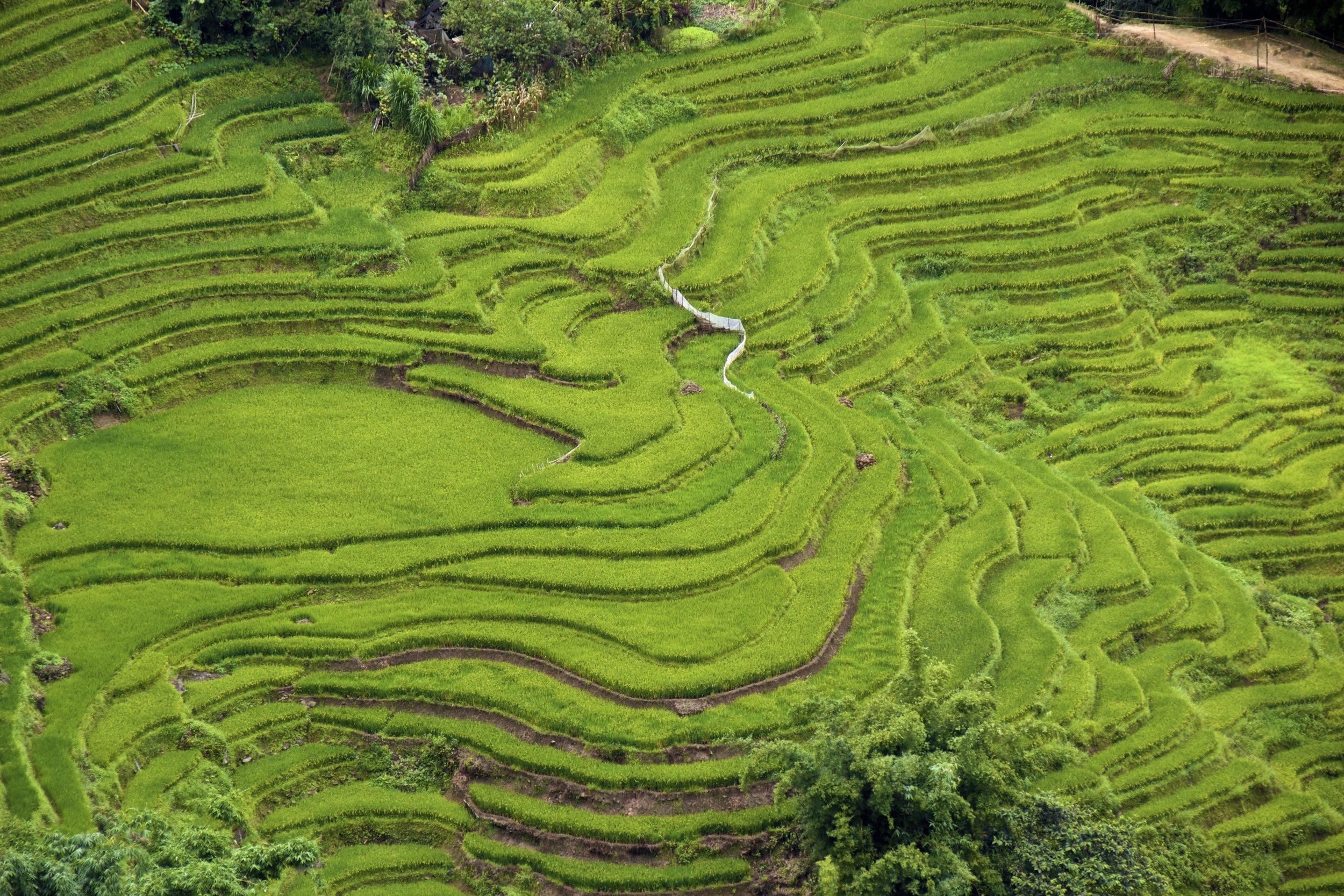 sa pa lao cai vietnam rice paddies 35.jpg
