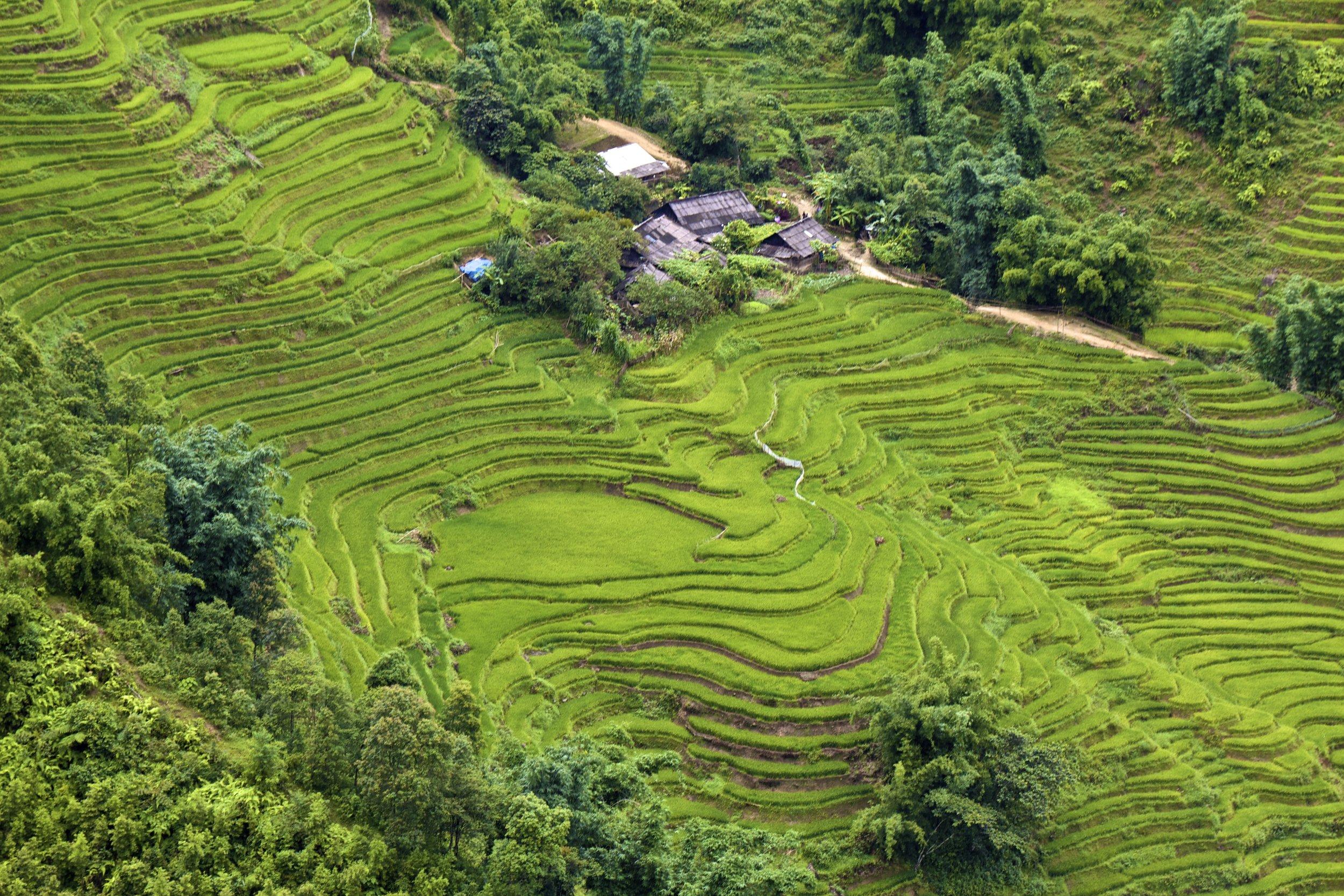 sa pa lao cai vietnam rice paddies 38.jpg