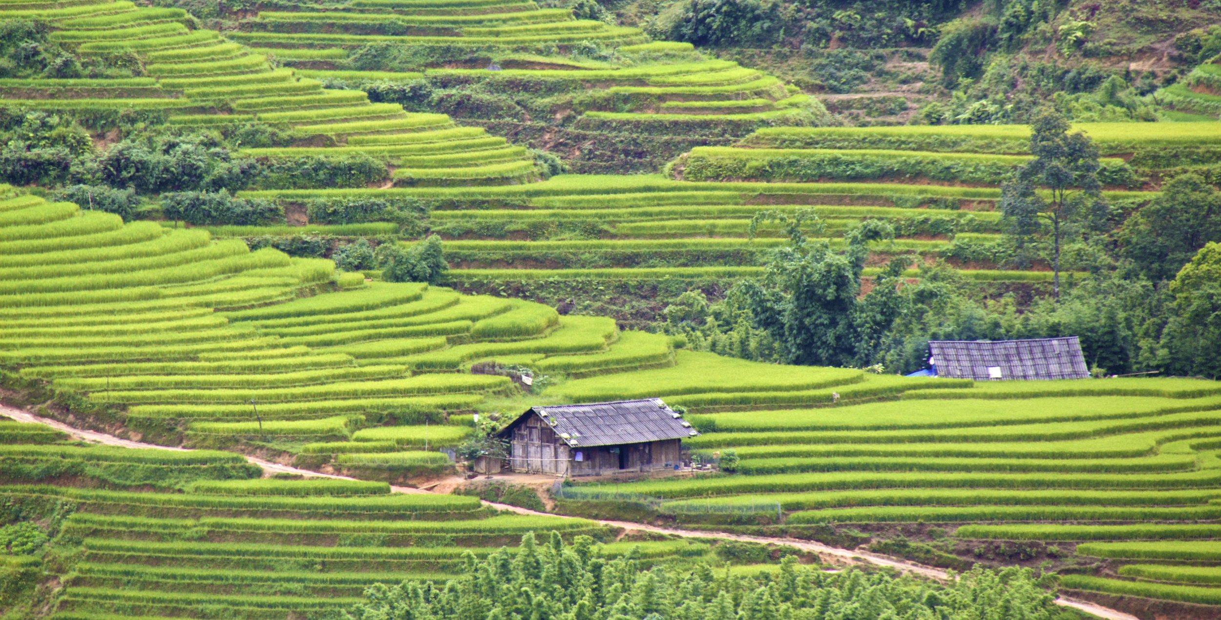 sa pa lao cai vietnam rice paddies 40.jpg
