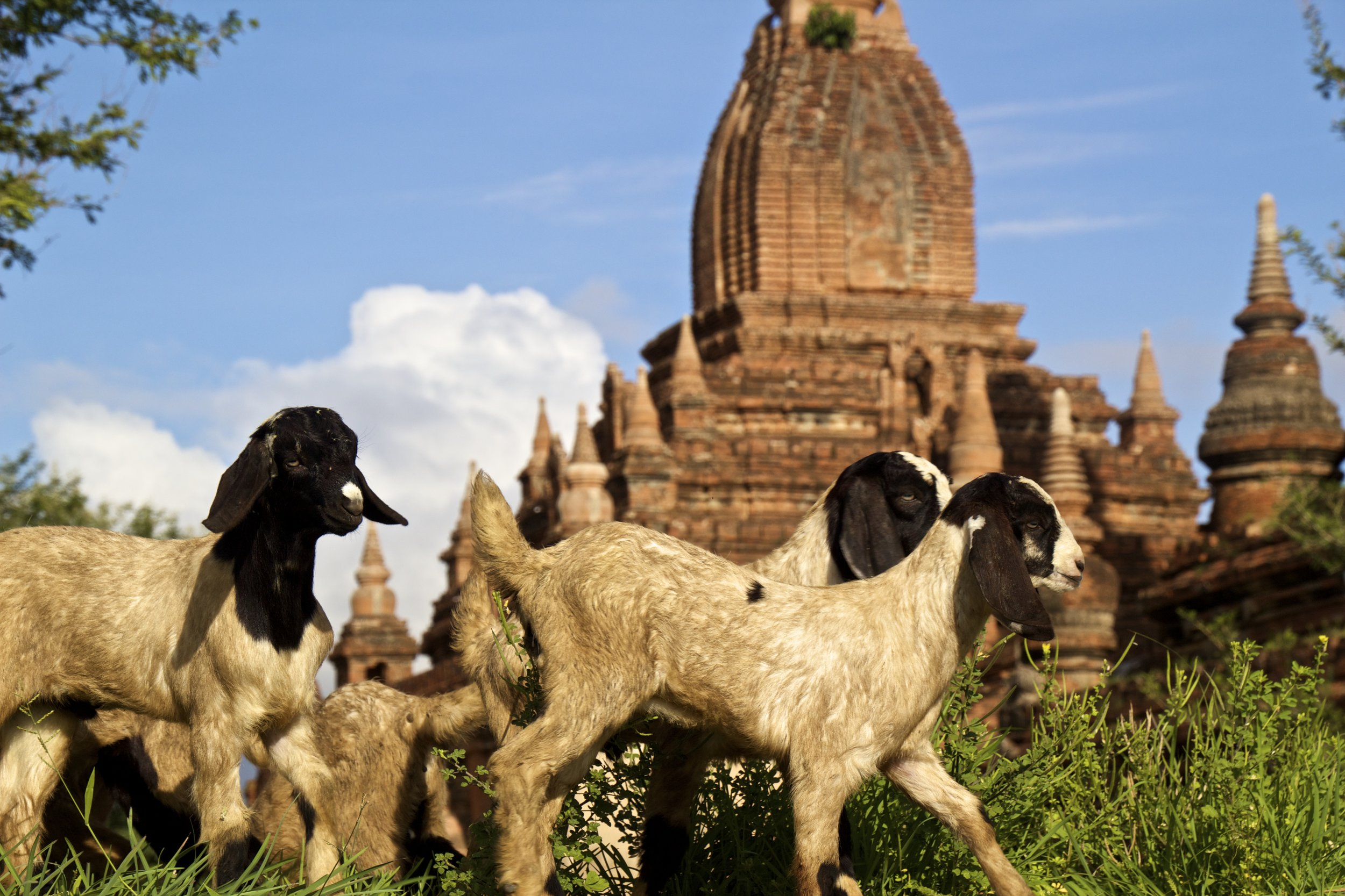bagan burma myanmar buddhist temples 1.jpg