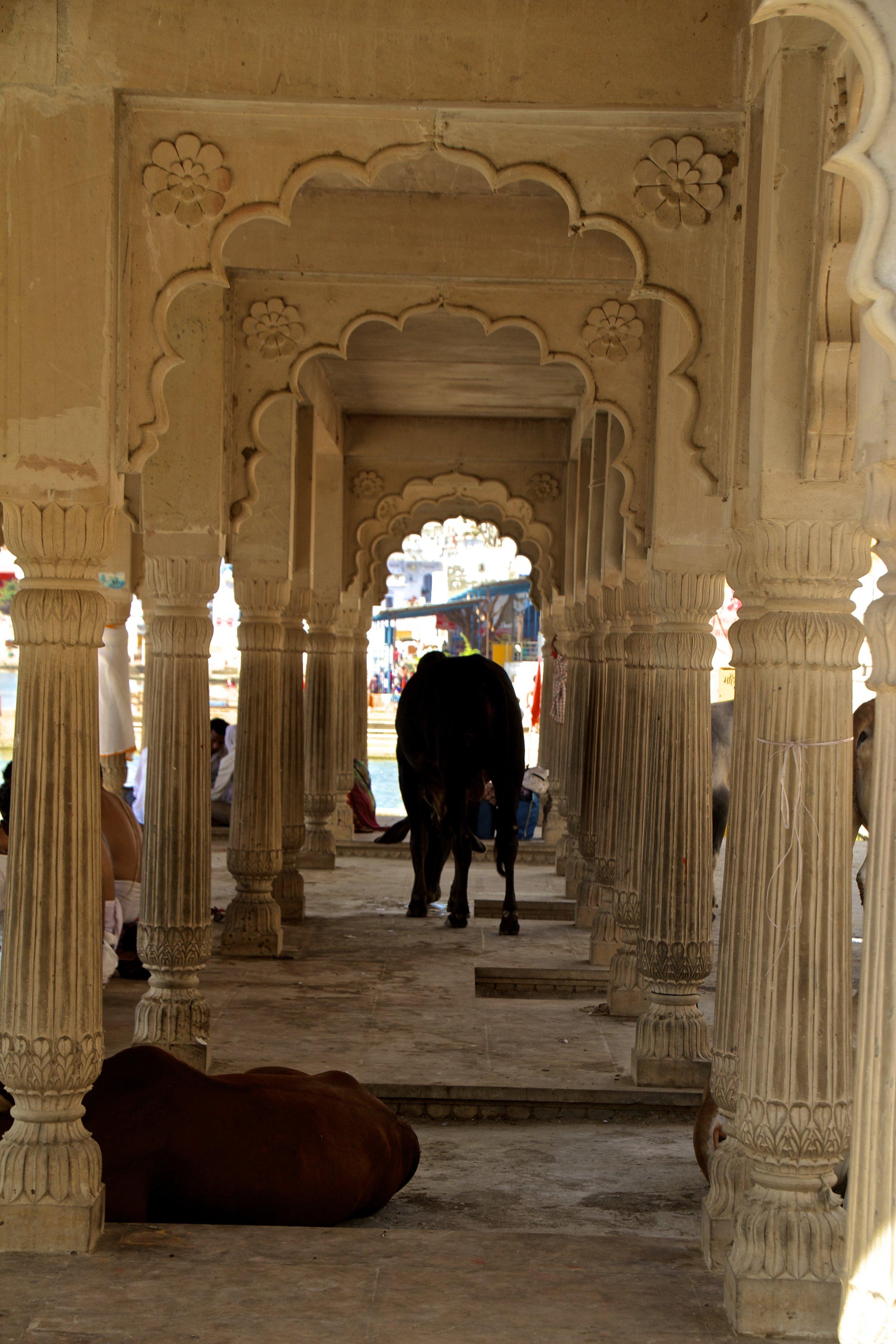 pushkar rajasthan ghats street photography 18.jpg