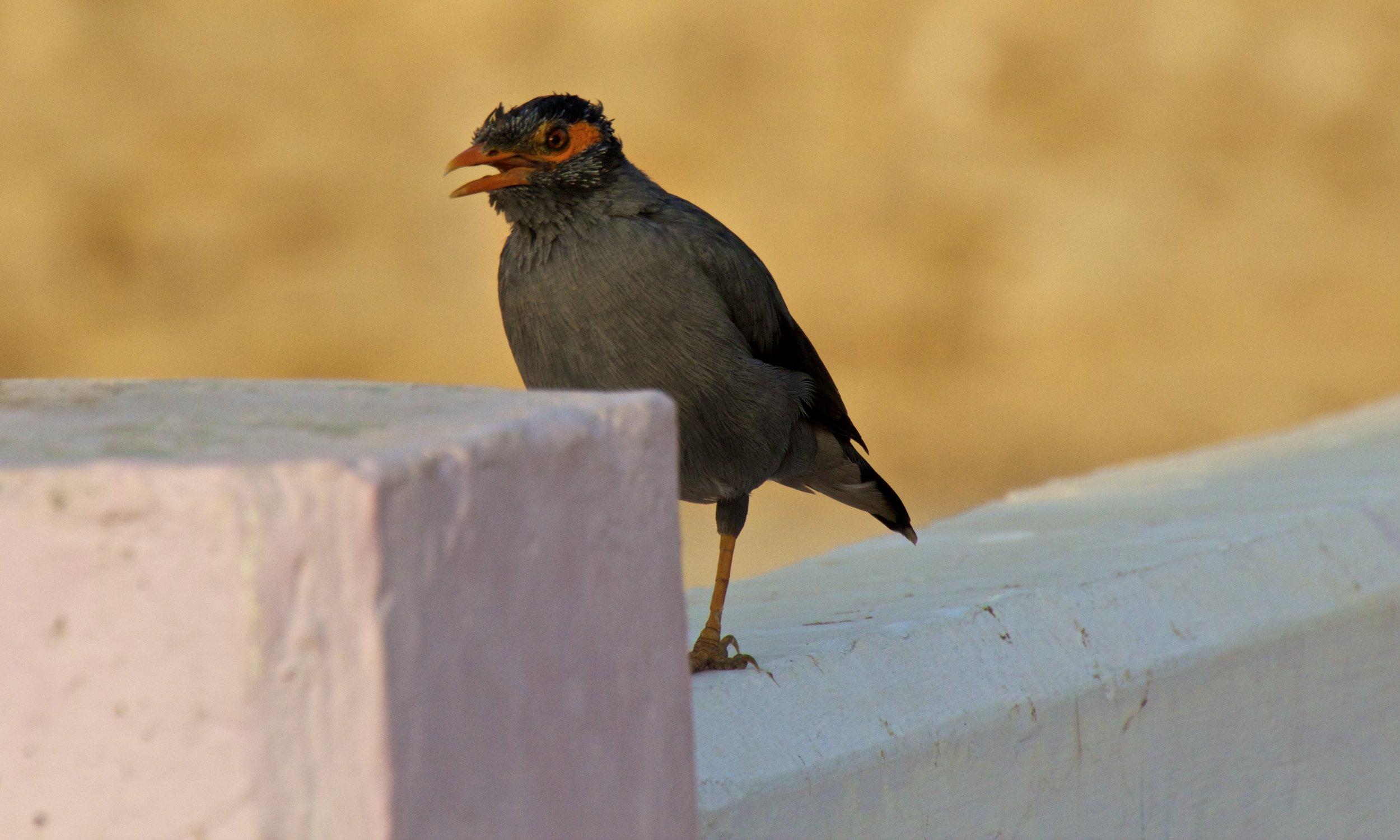 pushkar rajasthan street photography 5.jpg