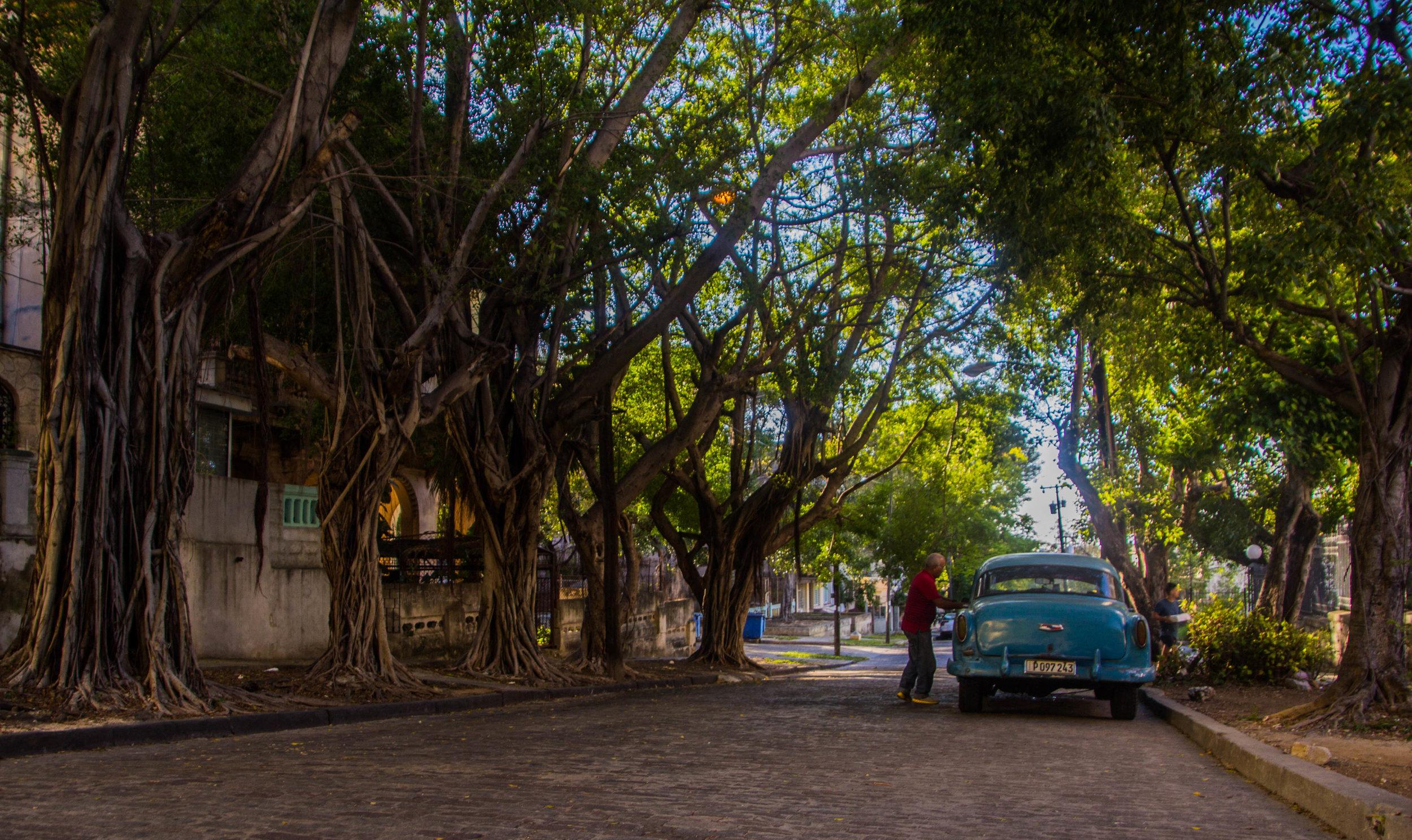 university of havana cuba-1-3-2.jpg