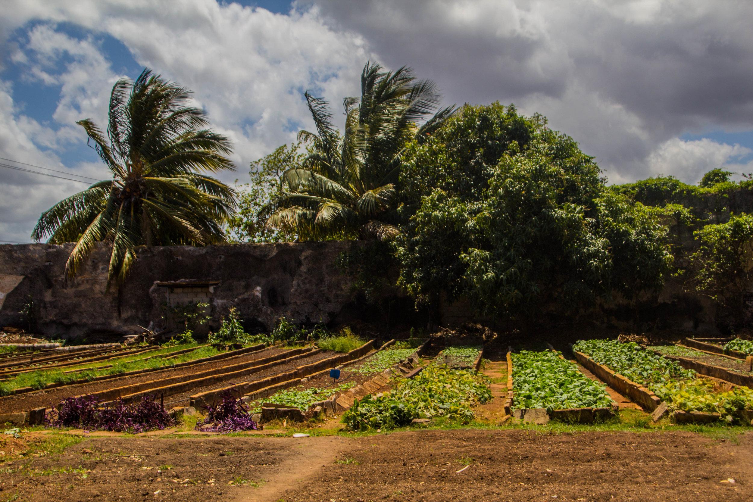 matanzas cuba urban farm-1-2.jpg