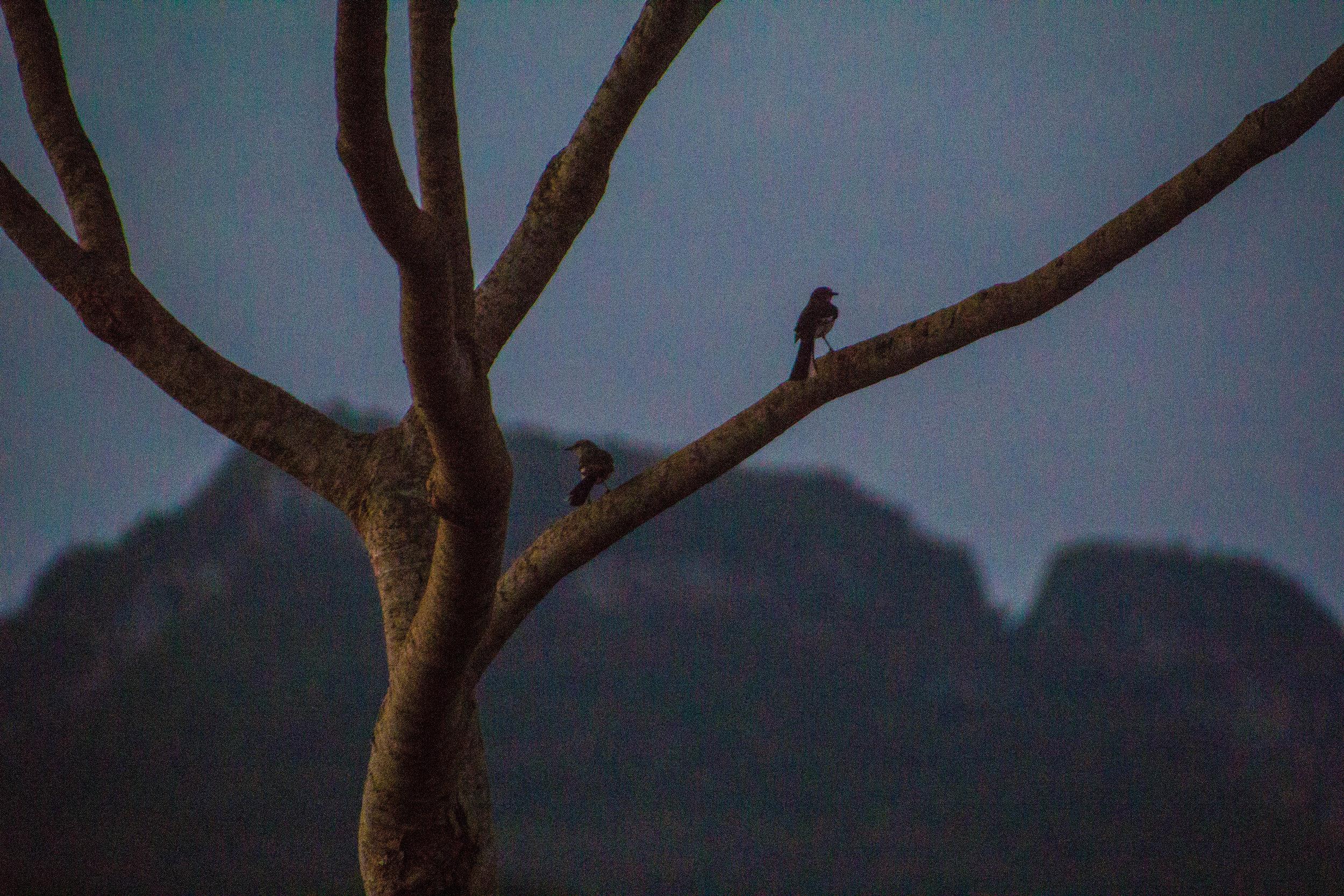 valle de viñales landscape birds cuba -1-2.jpg