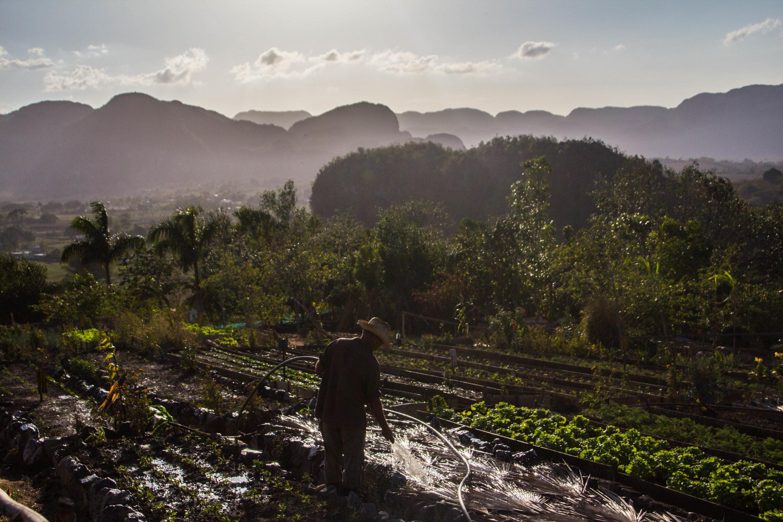 finca agroecological el paraiso restaurant viñales cuba-1-3-2.jpg