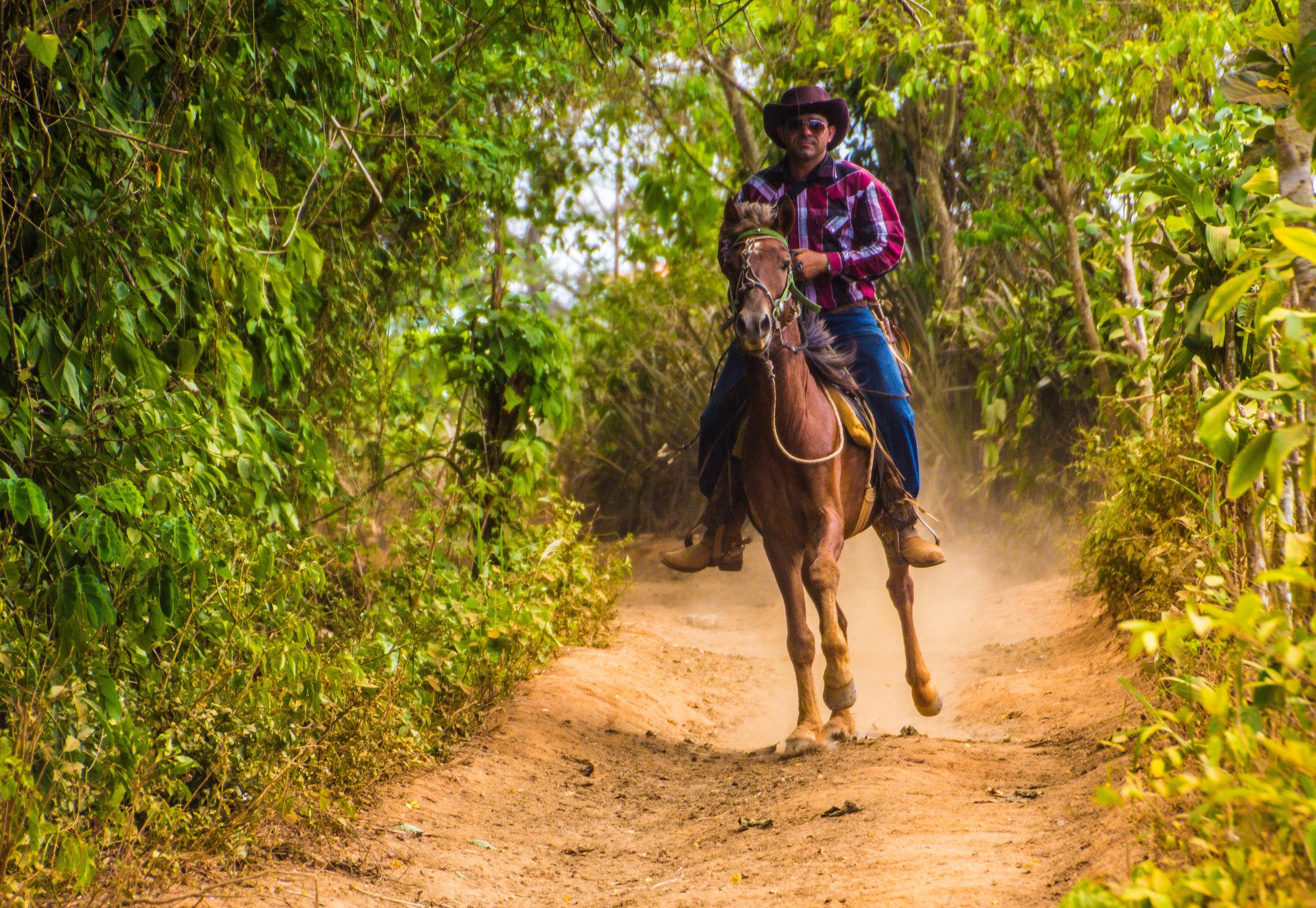horses viñales pinar del rio cuba-1-2-2.jpg