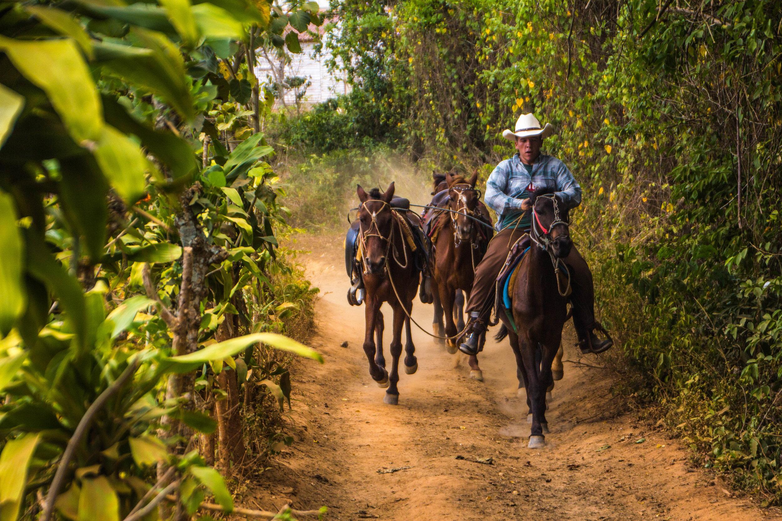 horses valle de viñales cuba -1-3.jpg