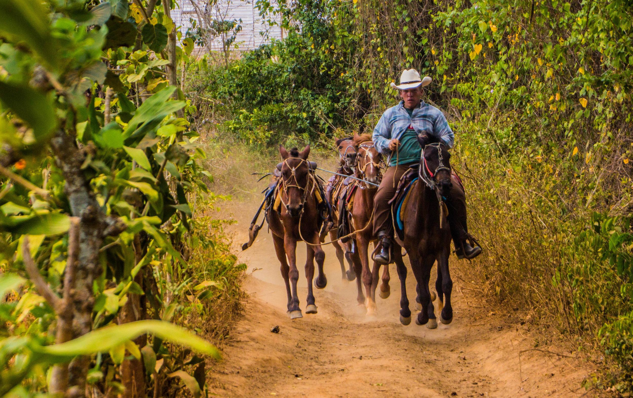 horses valle de viñales cuba -1-2-2.jpg