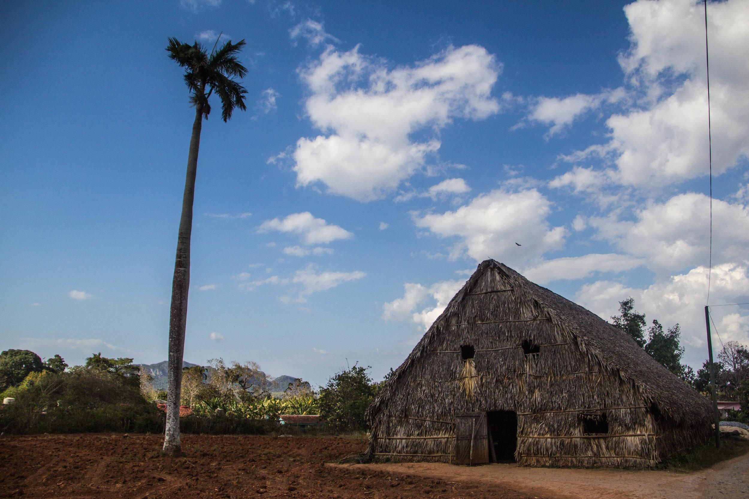 tobacco house viñales cuba-1-4.jpg