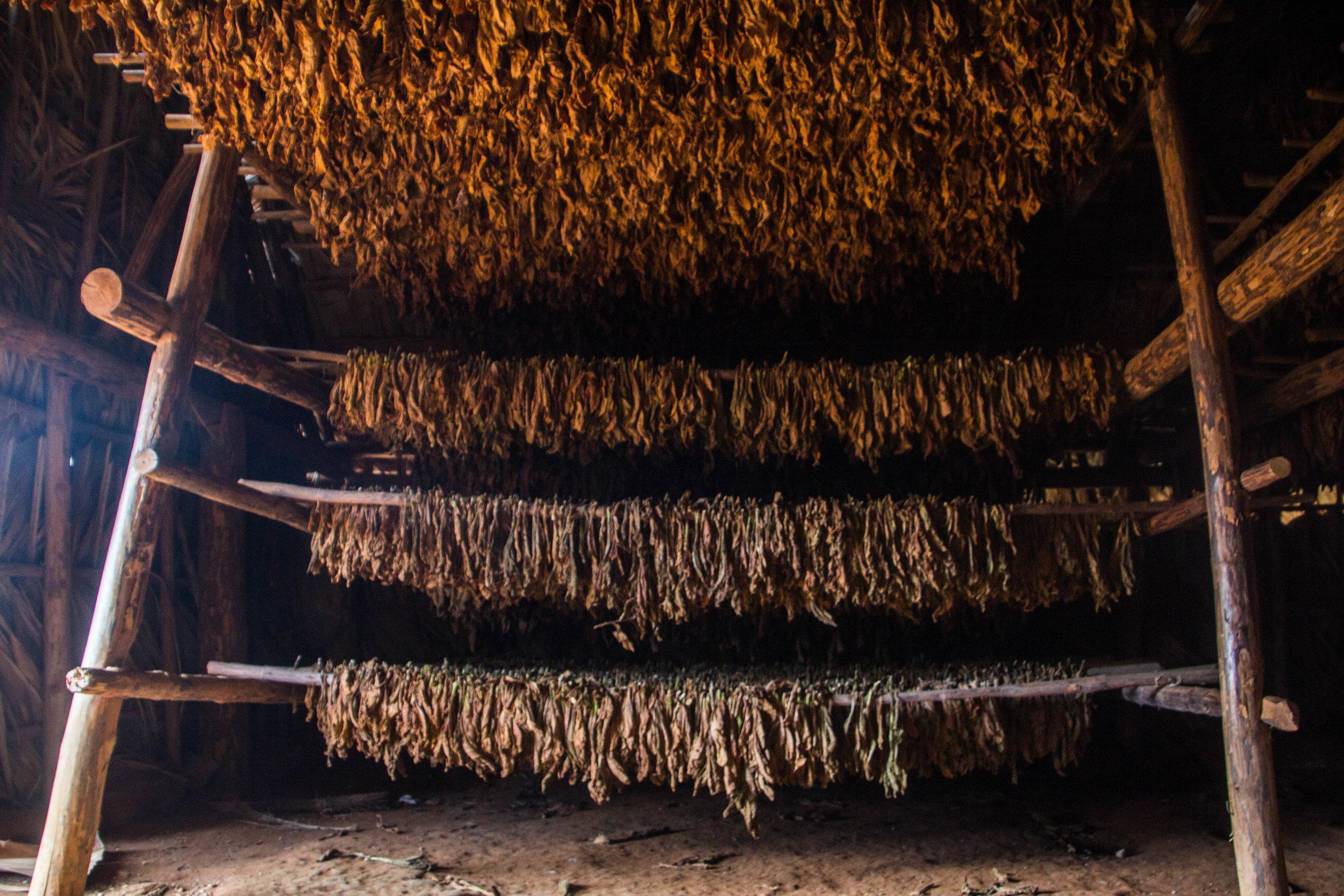 inside tobacco houses viñales cuba-1-4.jpg