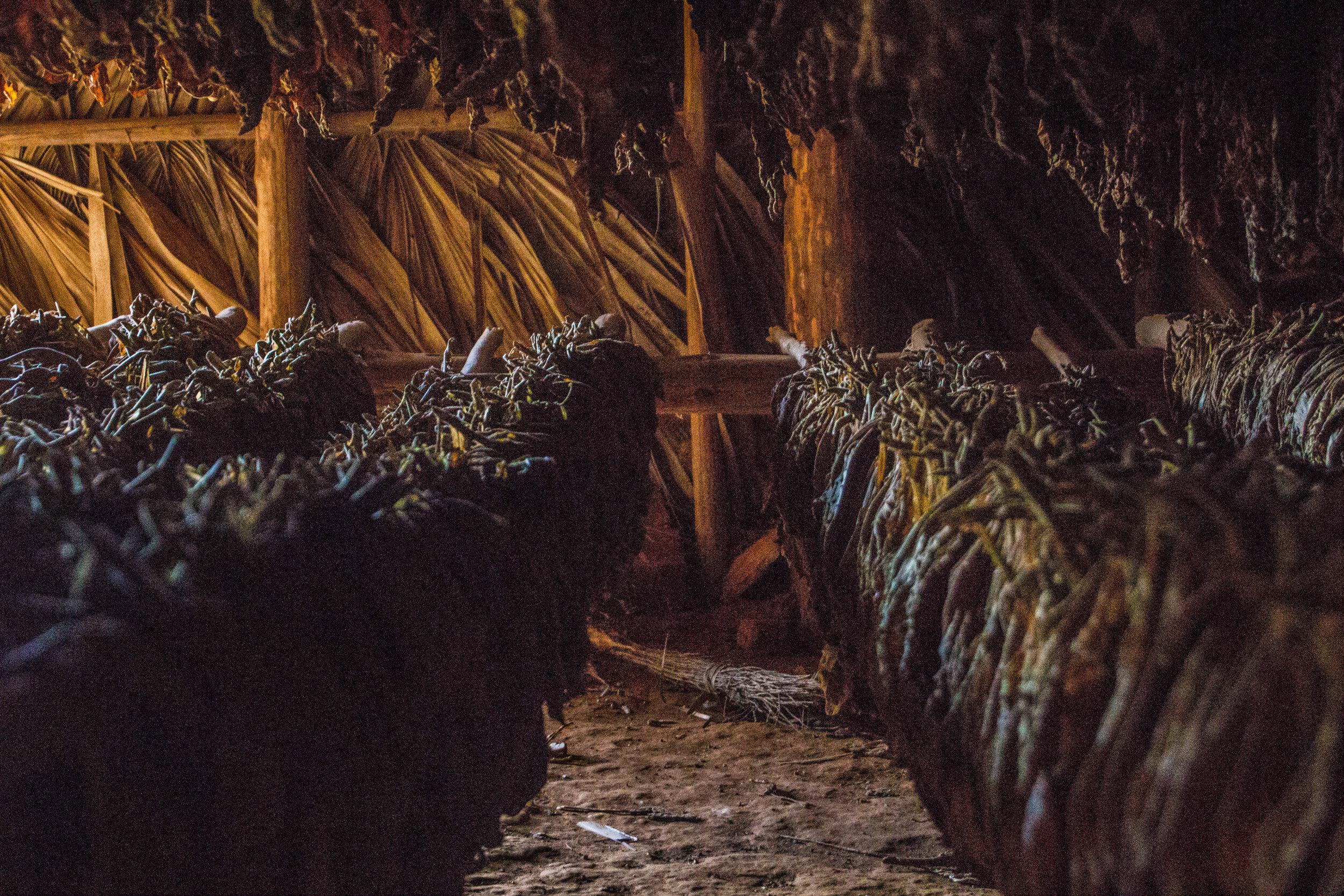 inside tobacco houses viñales cuba-1-2-2.jpg