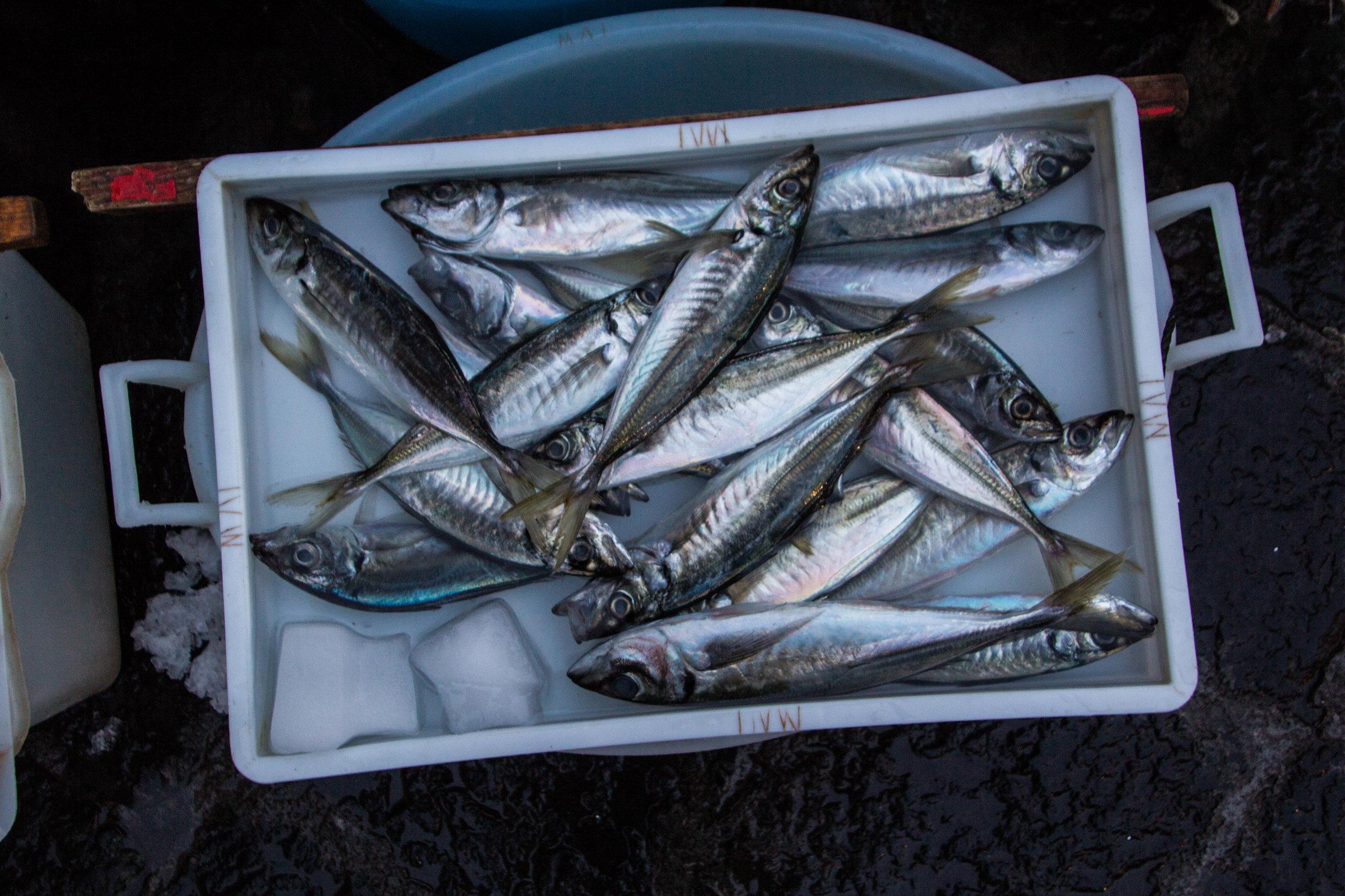 fish-market-catania-sicily-21.jpg