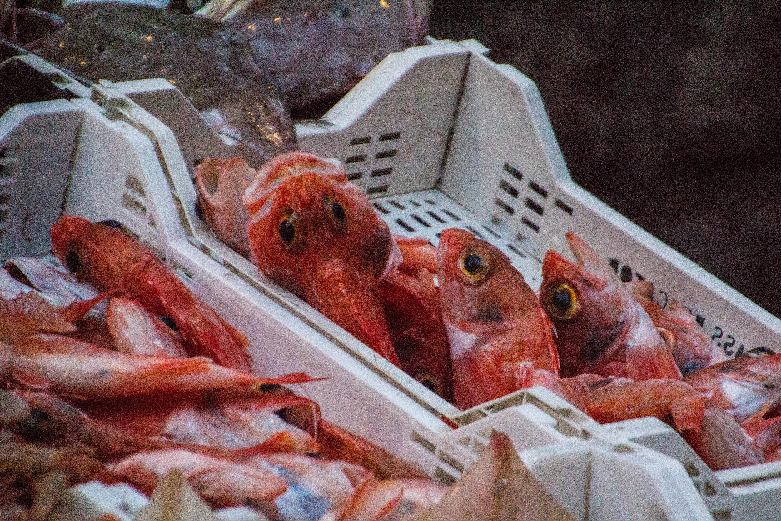 fish-market-catania-sicily-22.jpg