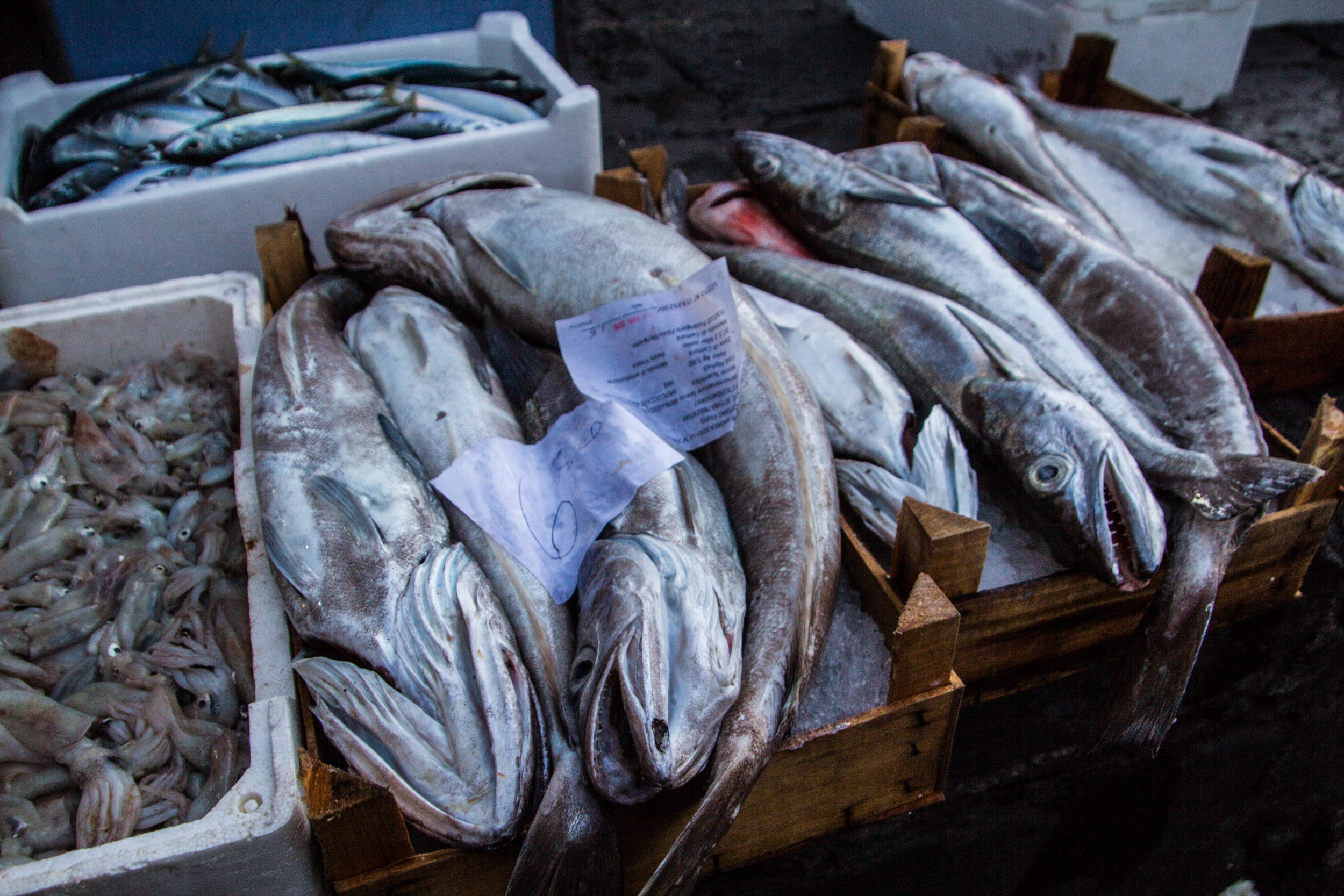 fish-market-catania-sicily-26.jpg