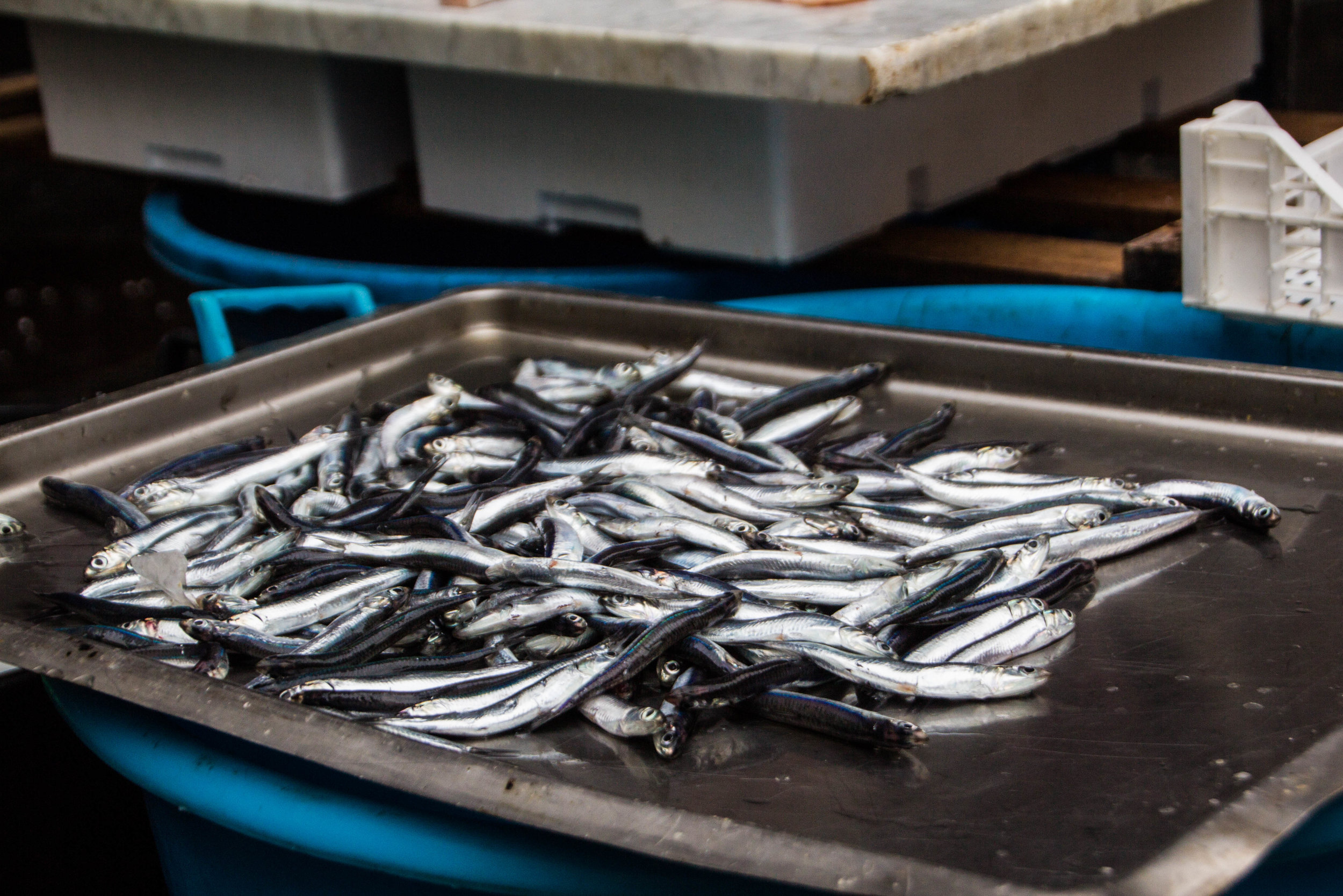 fish-market-catania-sicilia-4.jpg