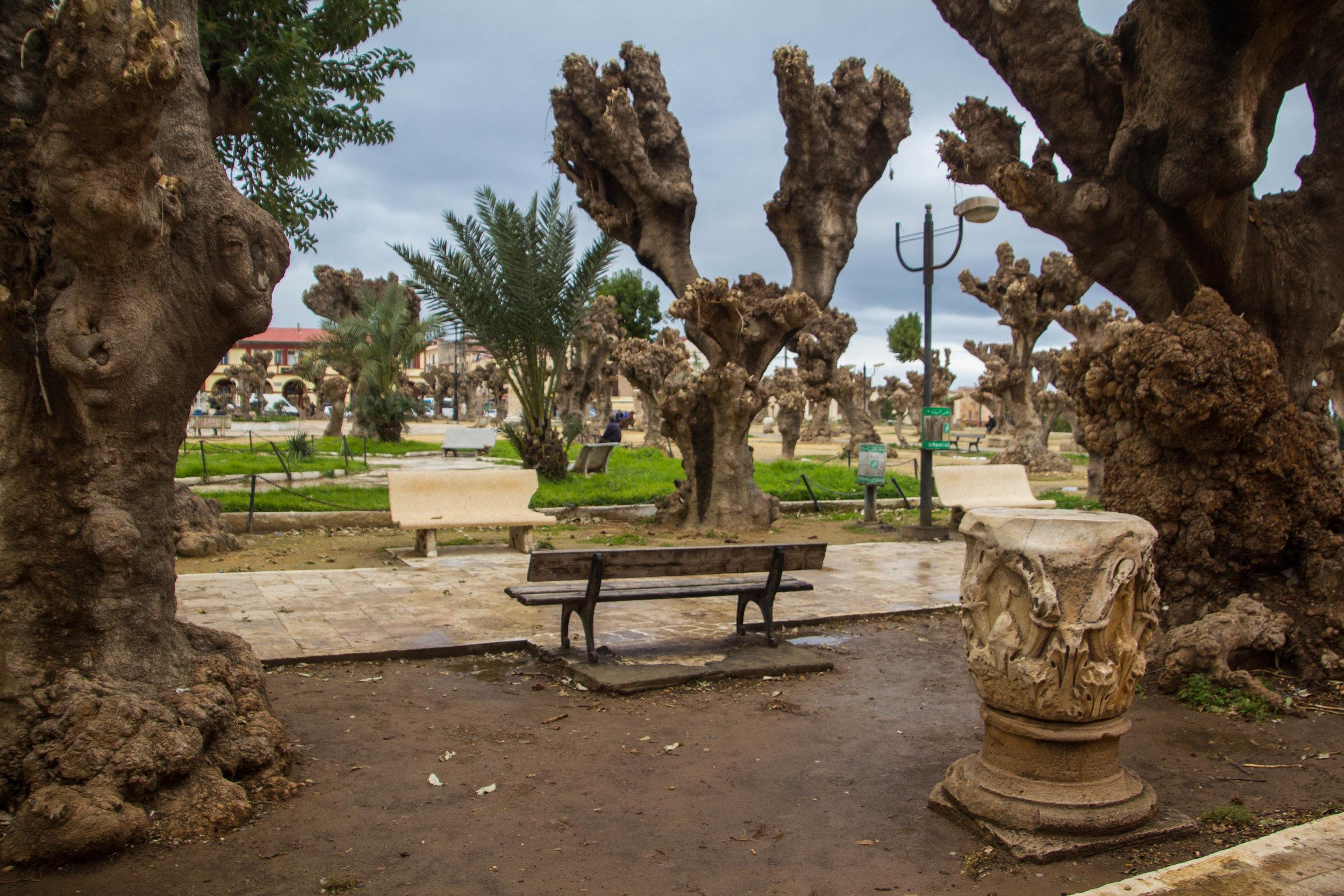 cherchelle-roman-ruins-algeria-13.jpg