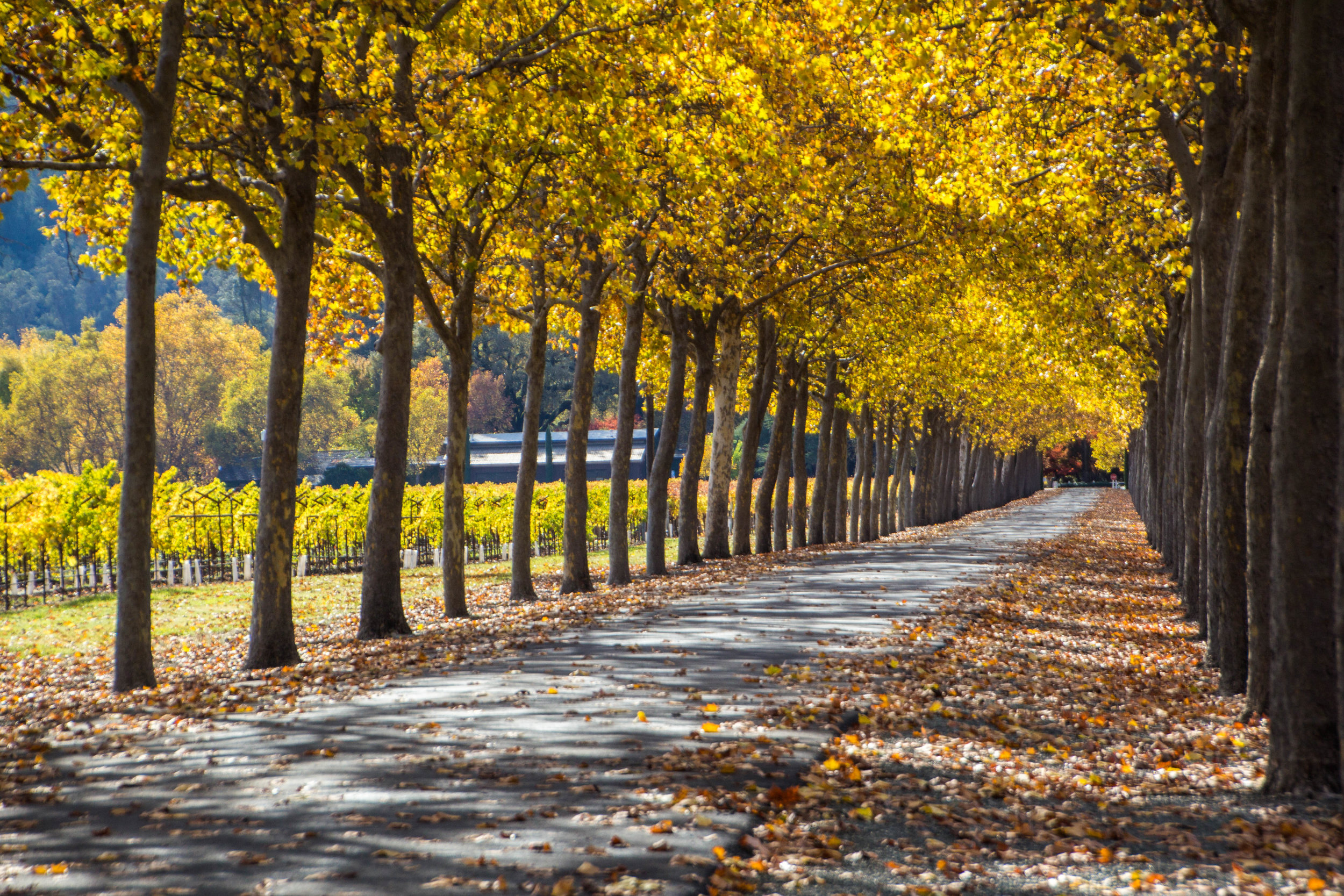 autumn-colors-napa-valley-24.jpg