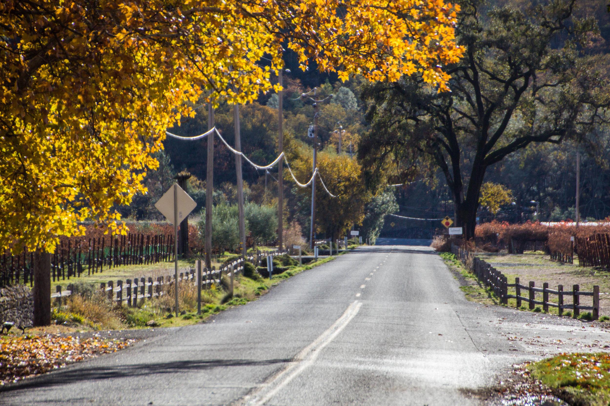 autumn-colors-napa-valley-29.jpg