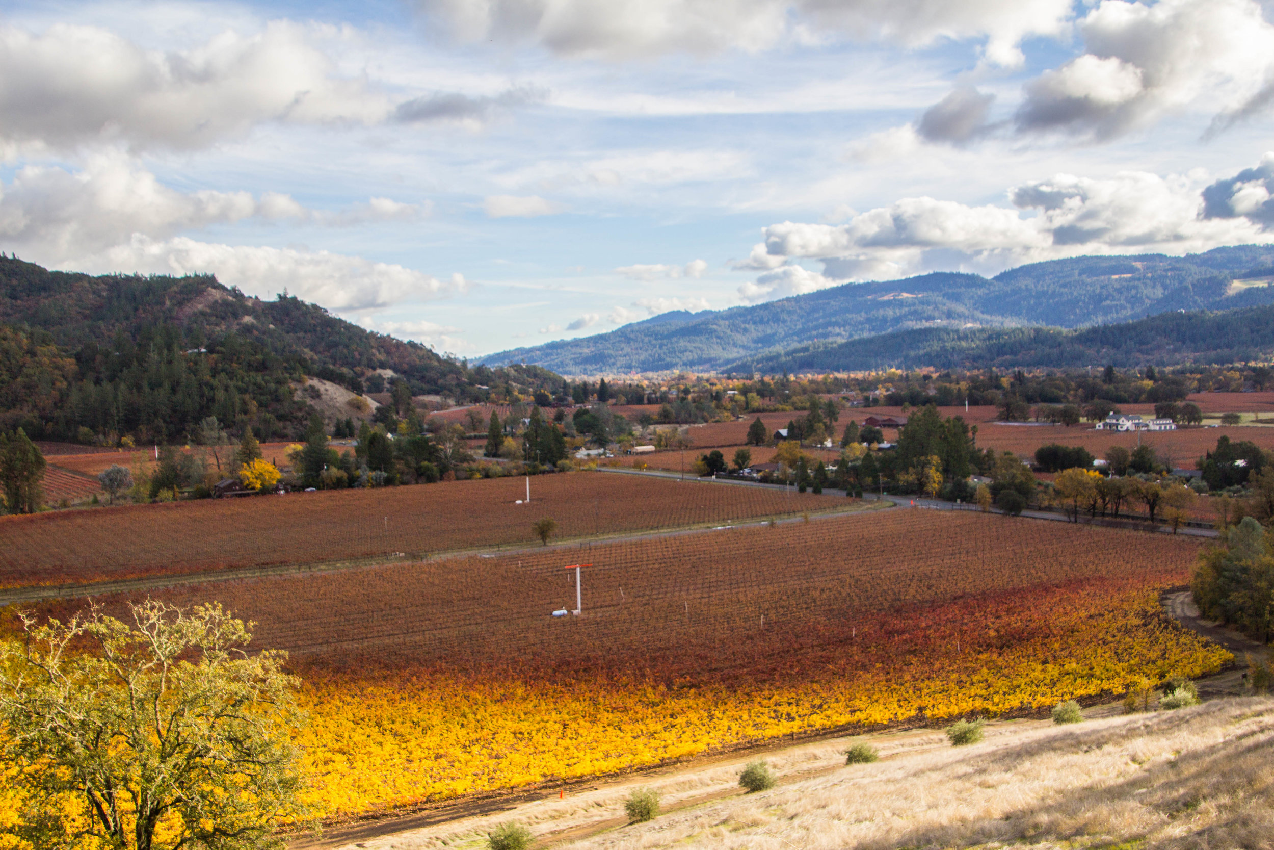autumn-colors-napa-valley-35.jpg