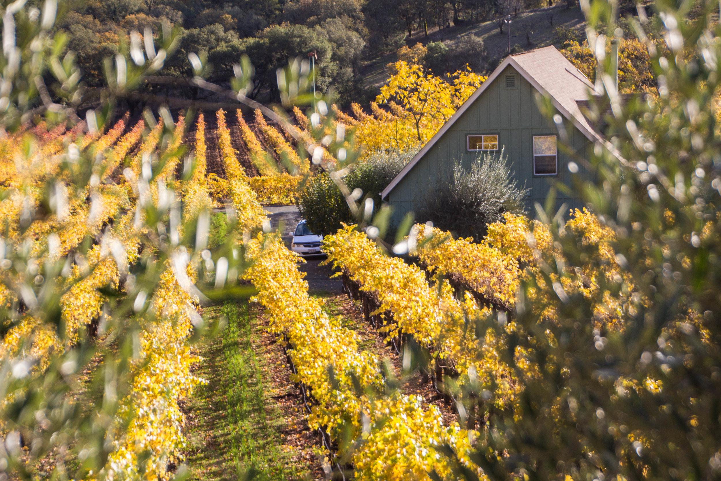 autumn-colors-napa-valley-43.jpg