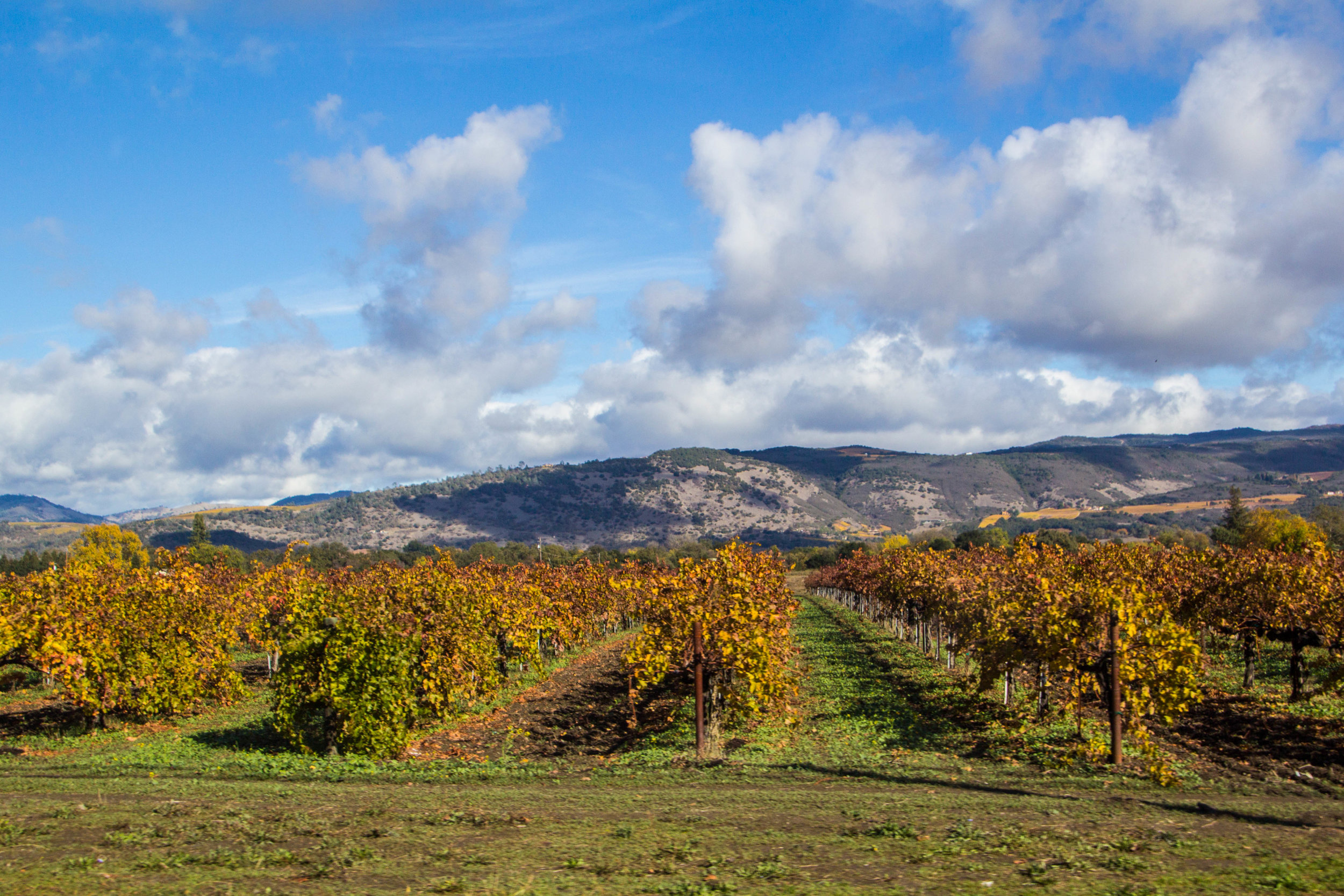 autumn-colors-napa-valley-5.jpg