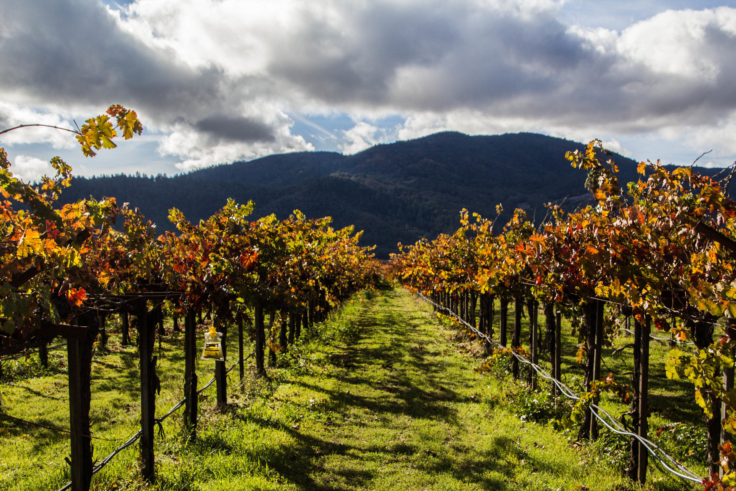 autumn-colors-napa-valley-9.jpg