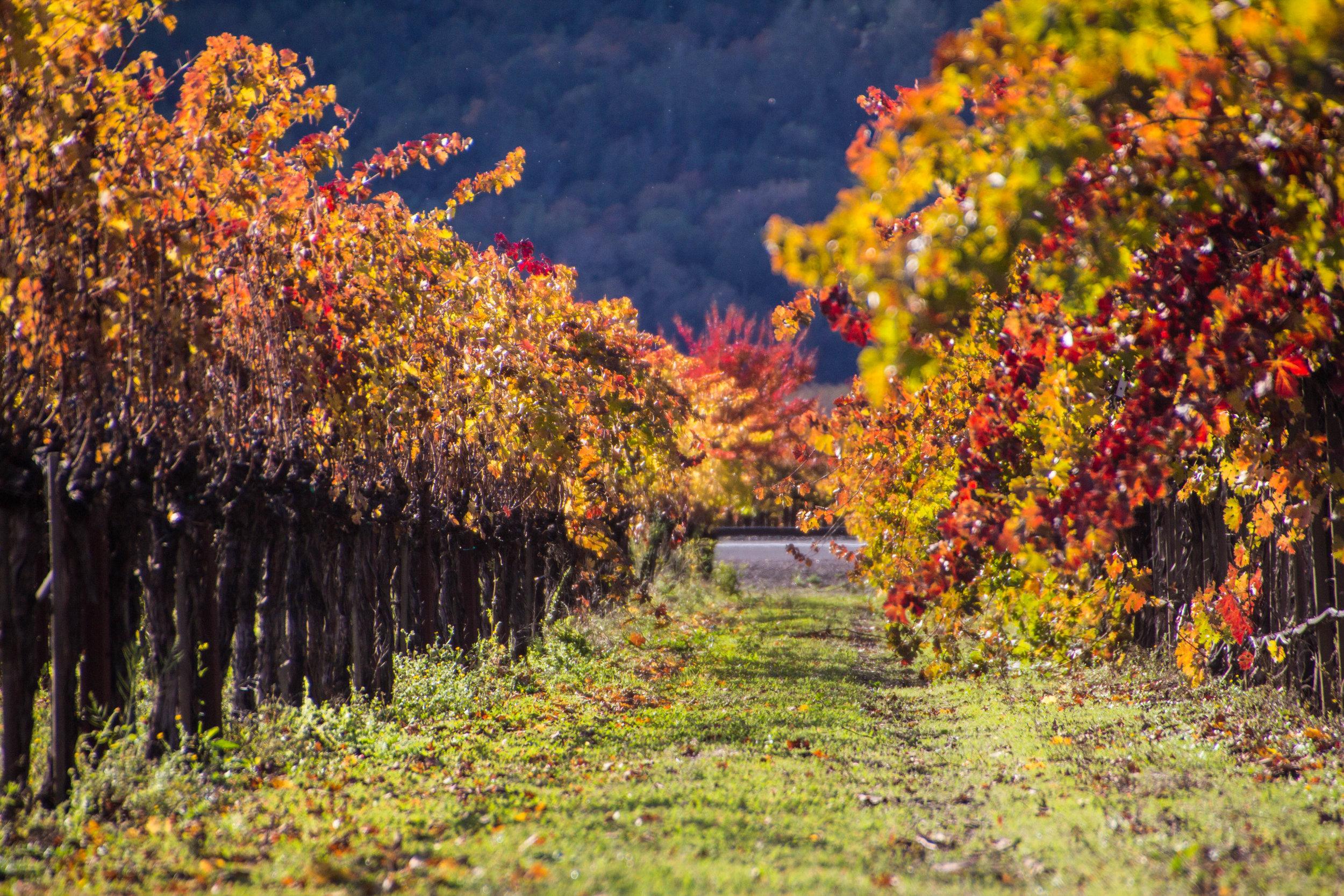 autumn-colors-napa-valley-11.jpg