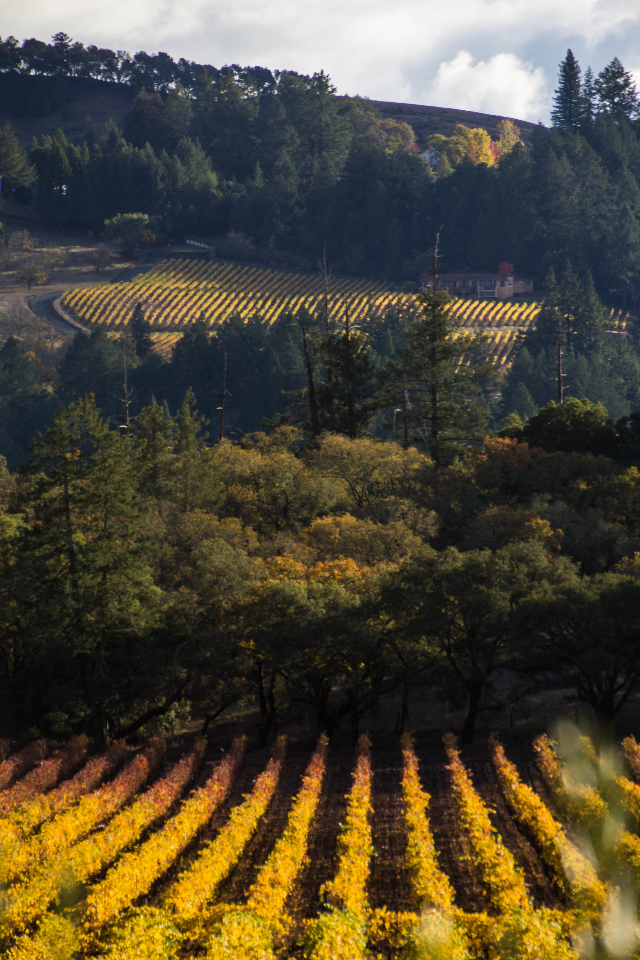 autumn-colors-napa-valley-46.jpg
