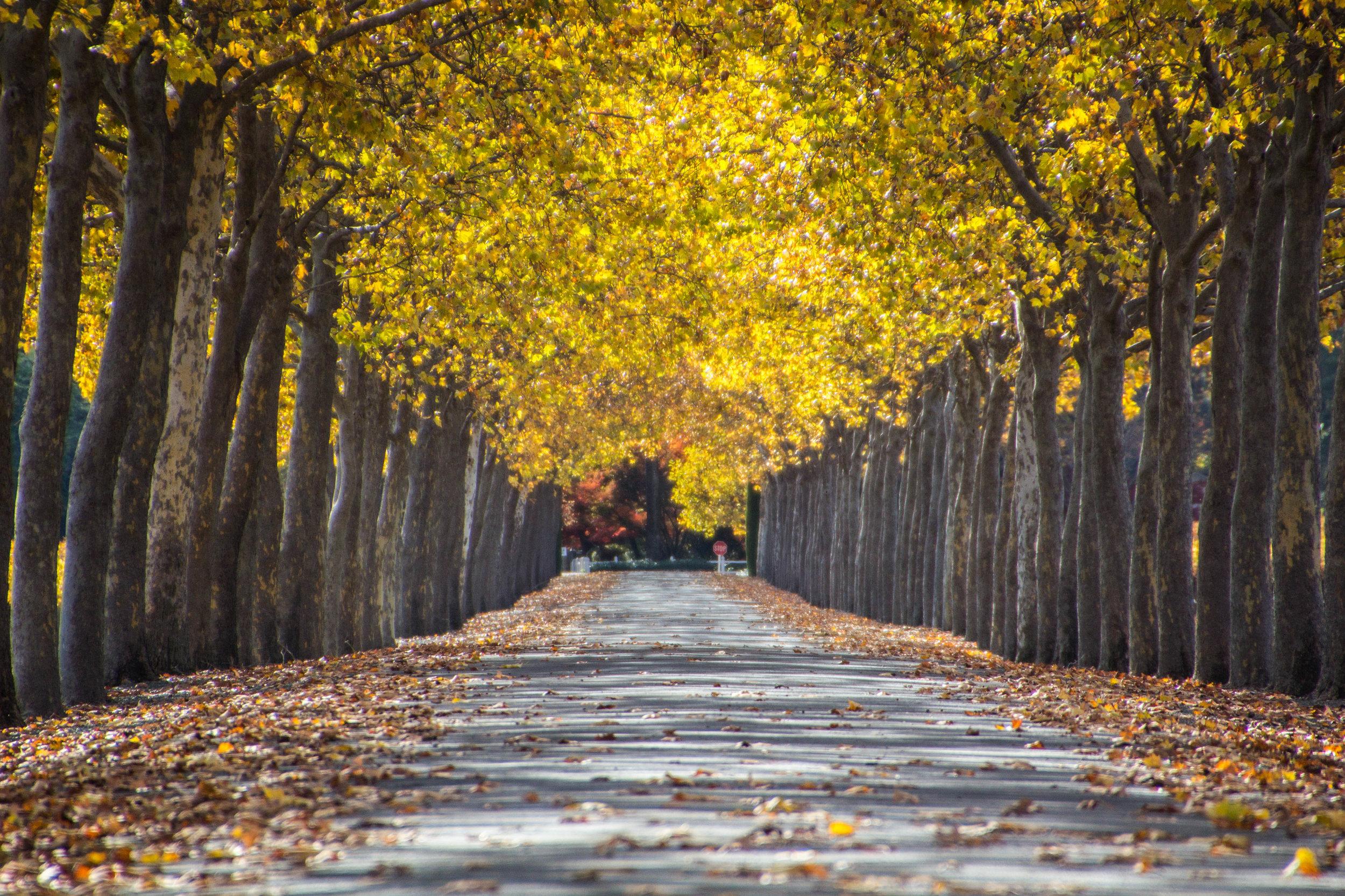 autumn-colors-napa-valley-21.jpg