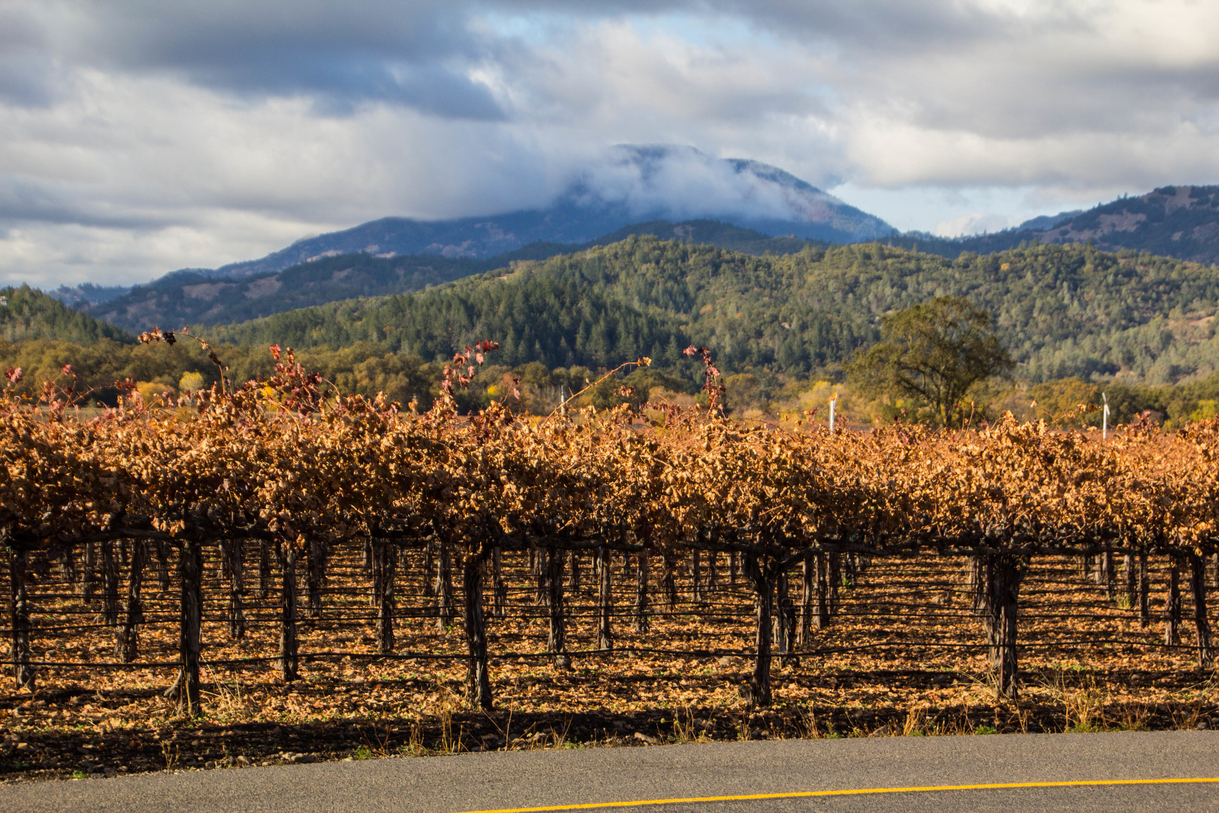 autumn-colors-napa-valley-32.jpg