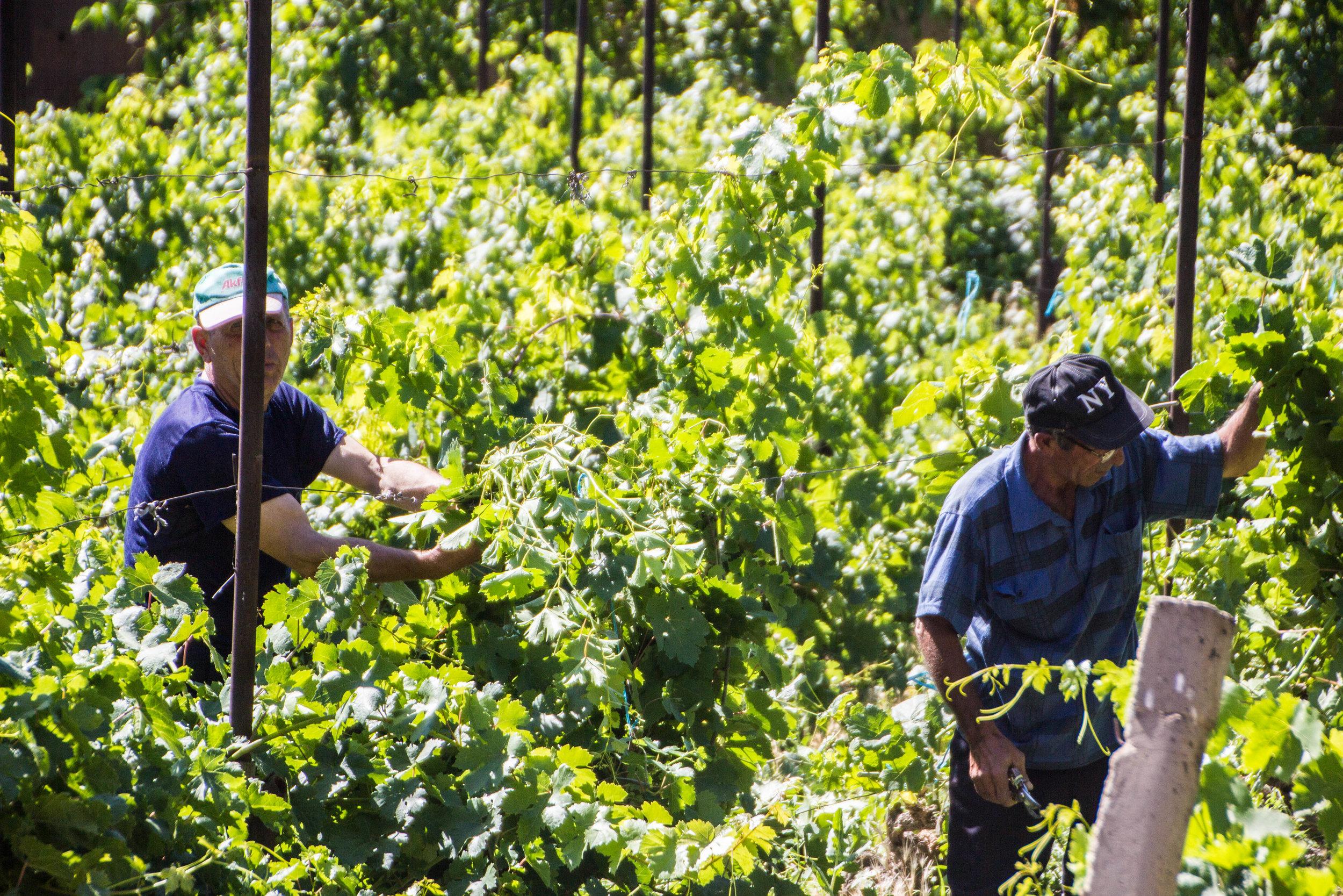 armenian-winelands-3.jpg